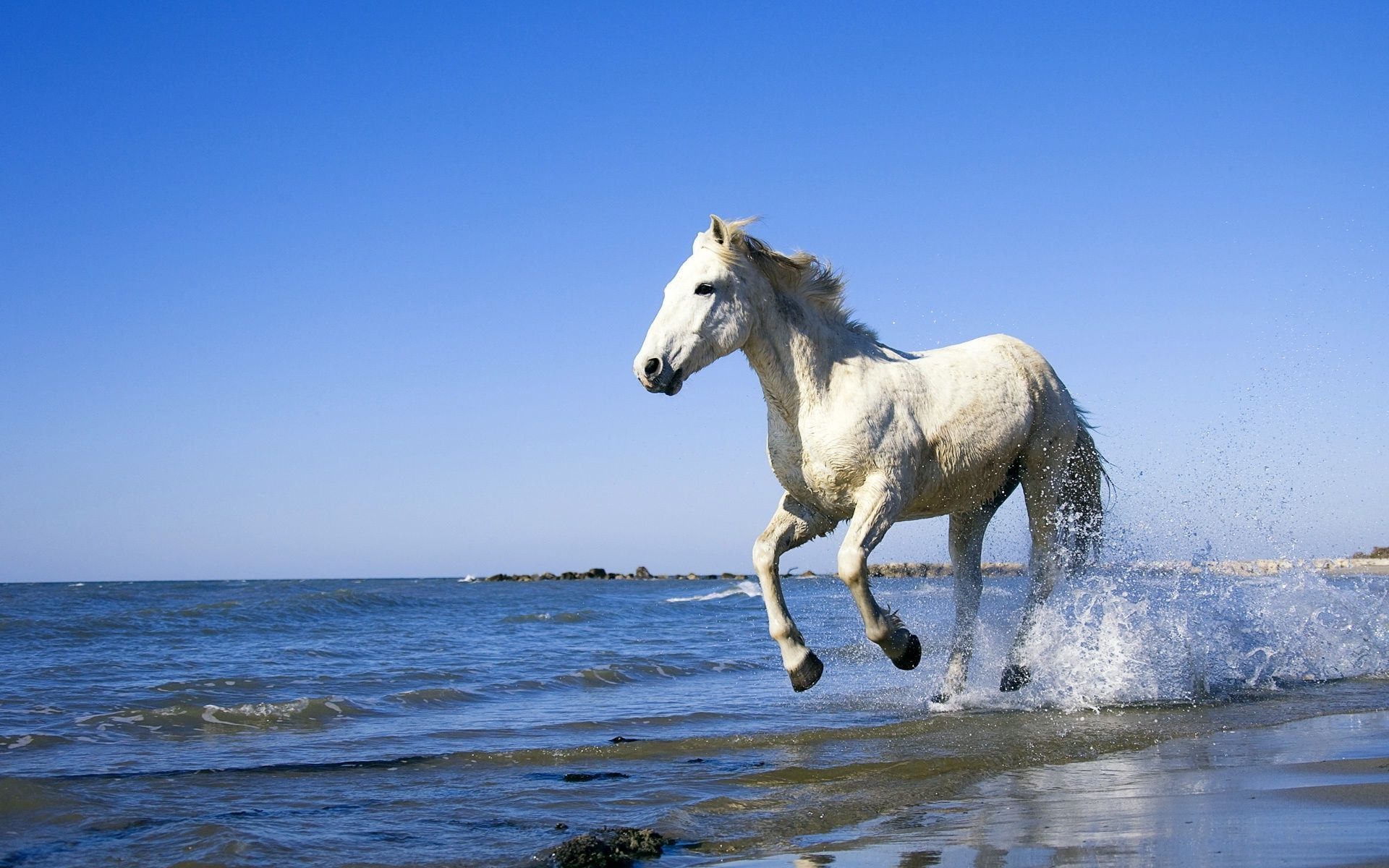 A Horse On The Beach