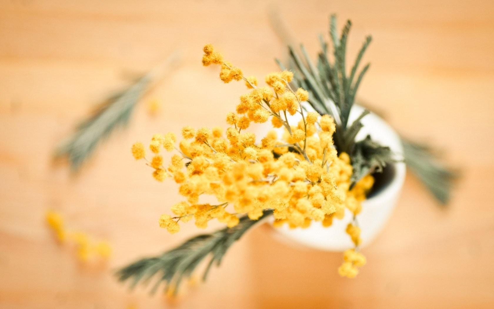 Acacia Dealbata Mimosa Flowers Yellow Vase