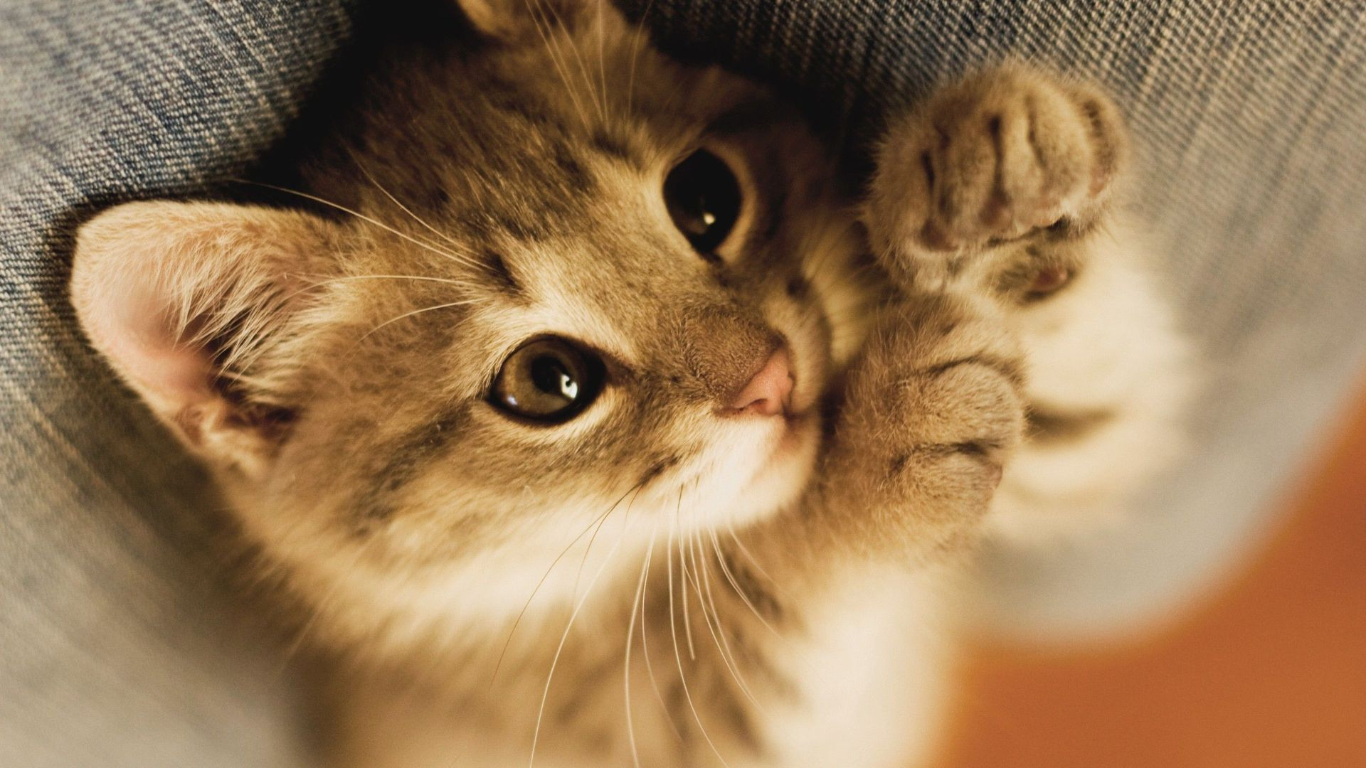 Adorable Cat Close Up Wallpaper