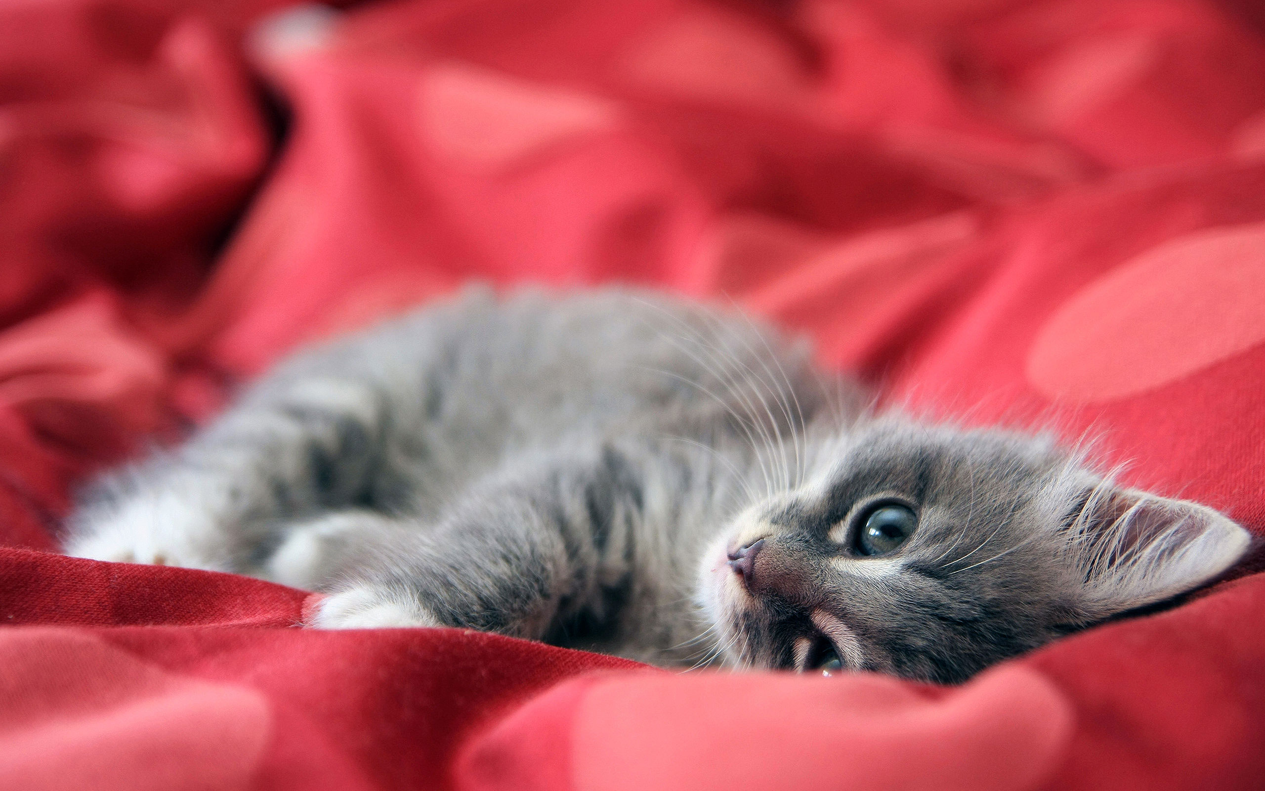 4 (Showcase: 40 Adorable Cat Wallpapers in 1080p)