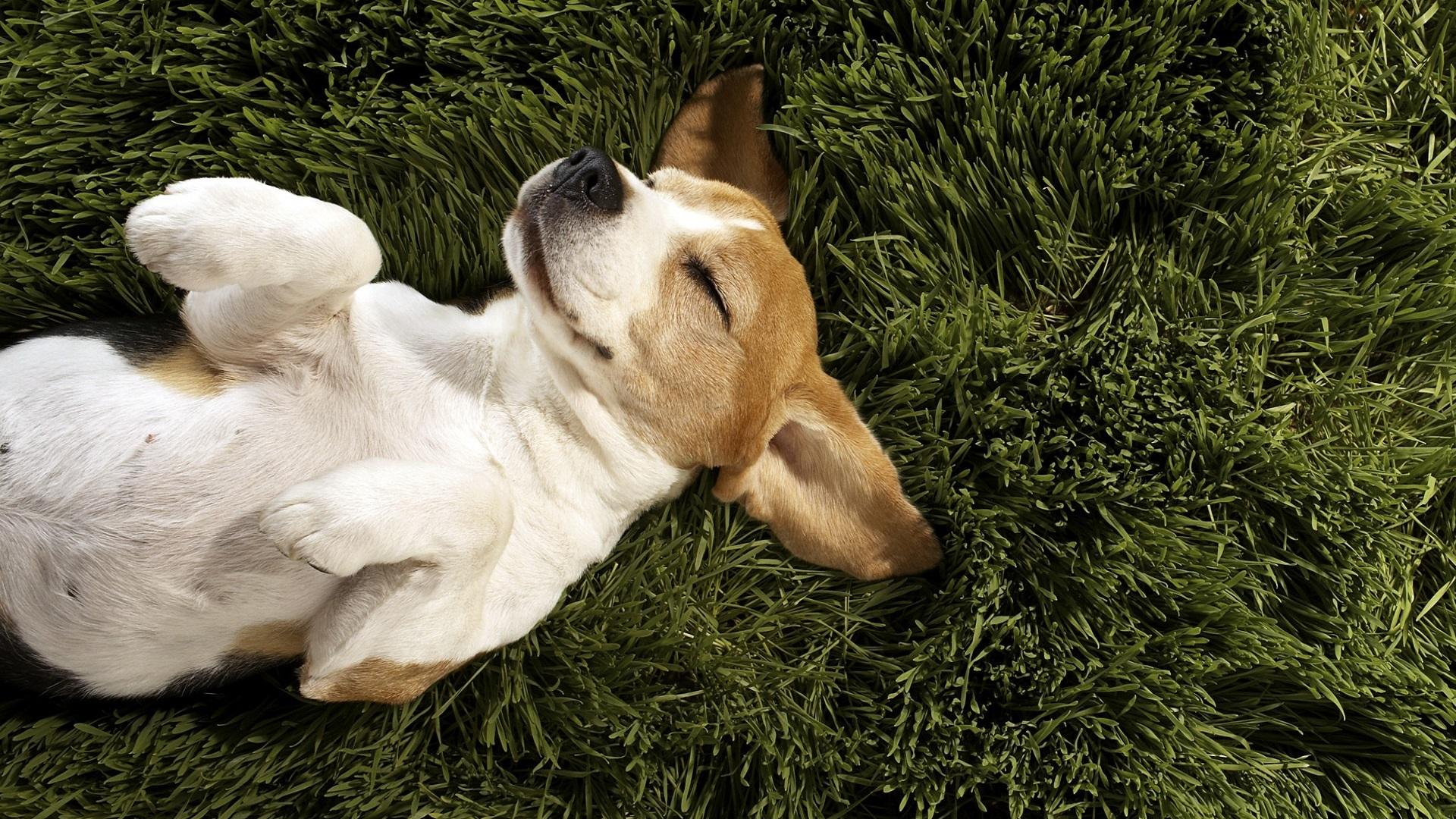 Adorable Happy Dog Wallpaper