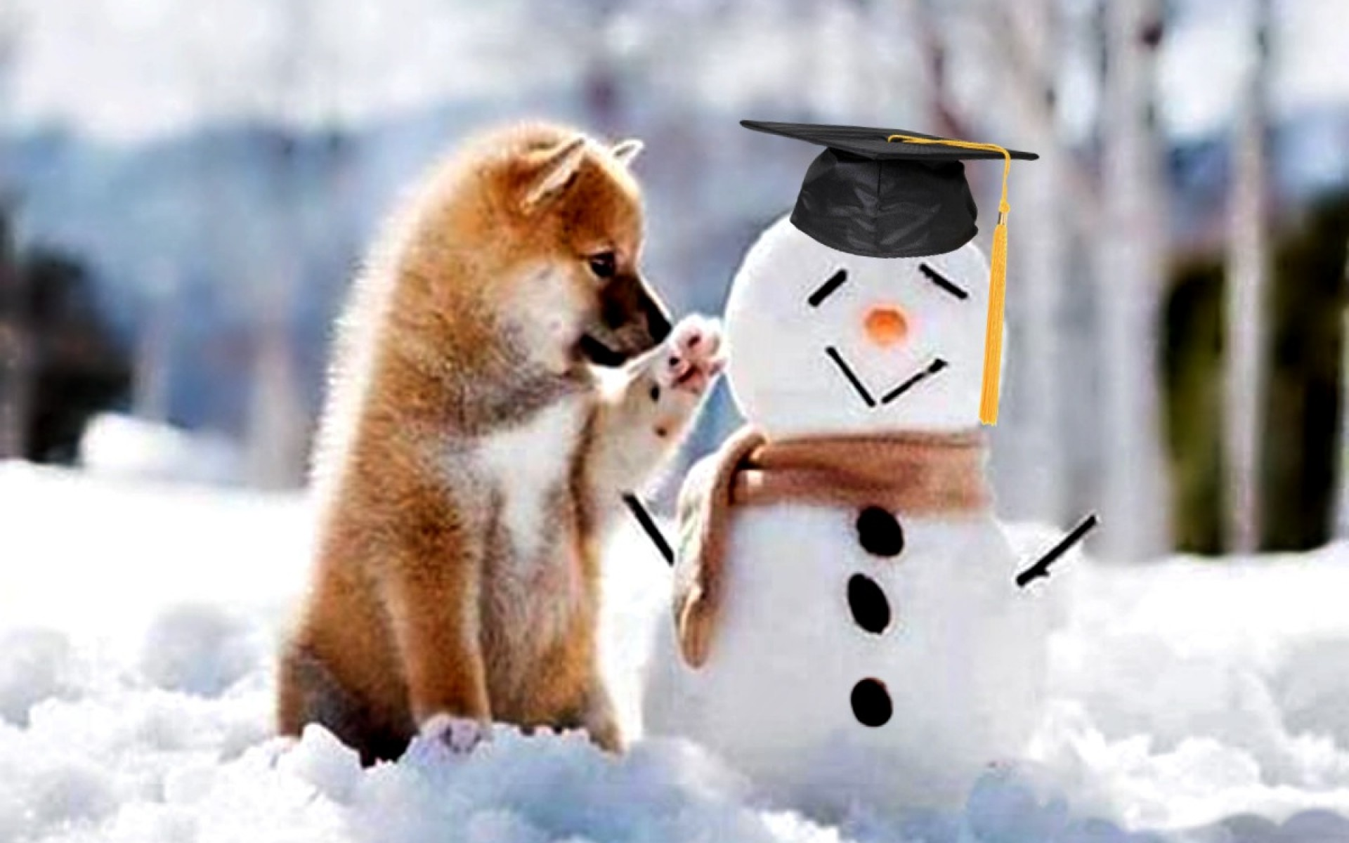 Adorable In Snow Wallpaper