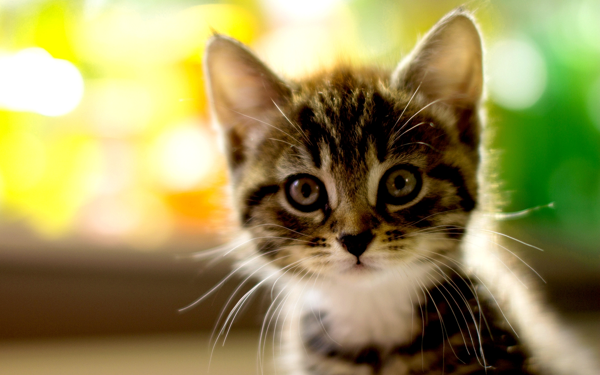 Adorable Kitty HD wallpapers
