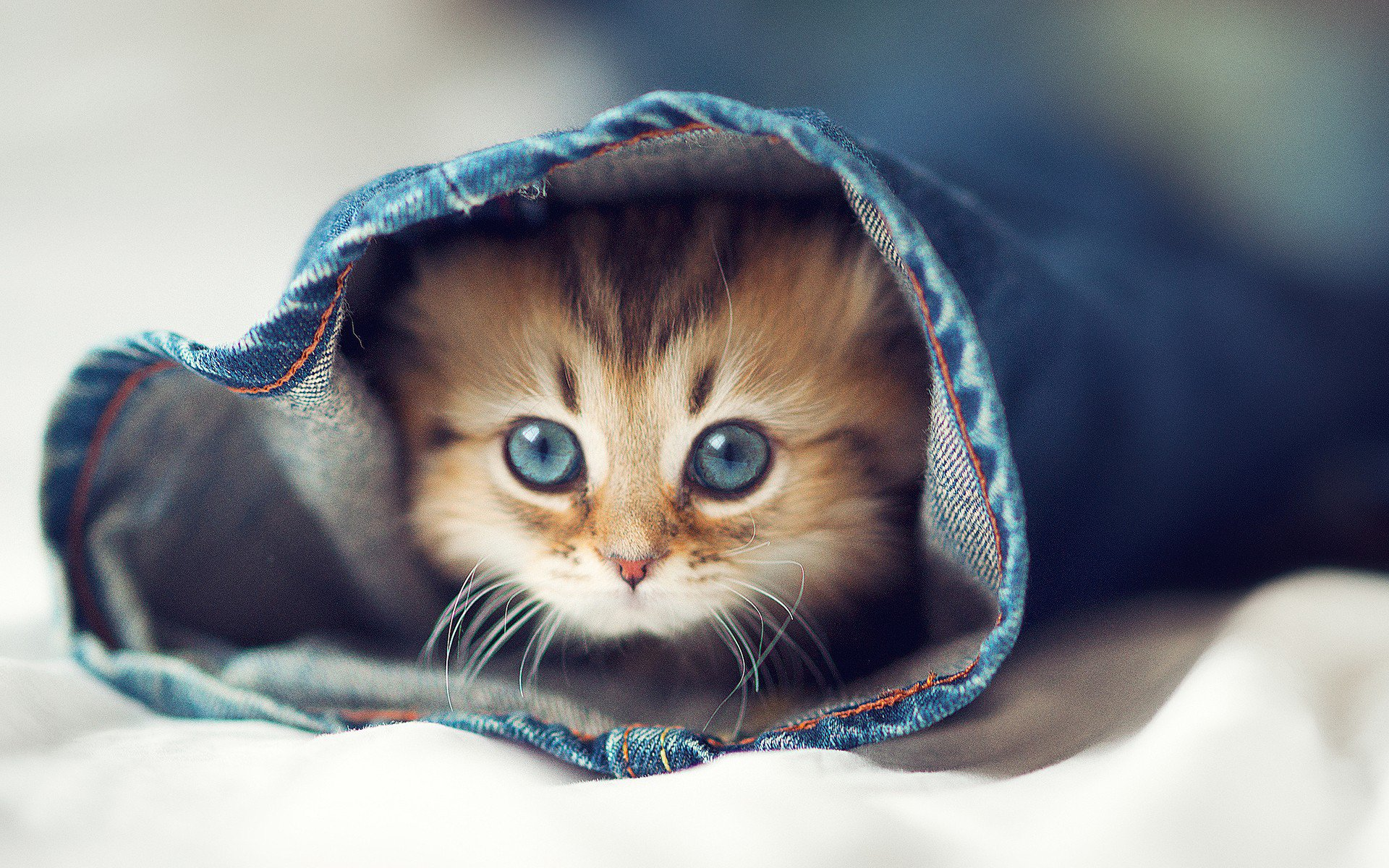 Cute Cats Cats Picture Cute Wallpapers Hd For Mobile