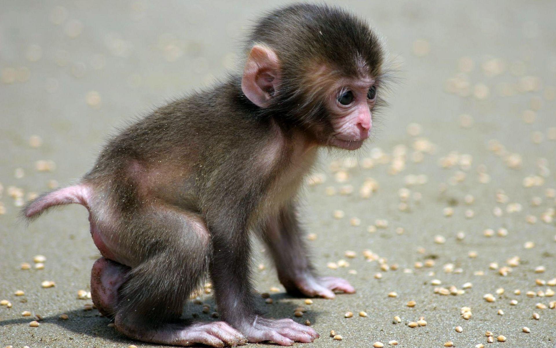 Adorable Monkey Wallpaper