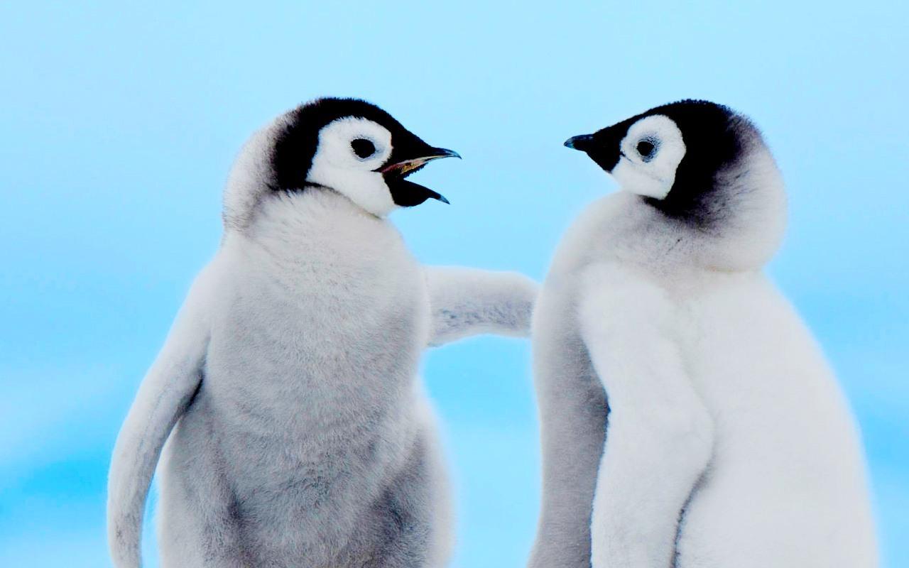 Adorable Penguin wallpaper | 1280x800 | #11284