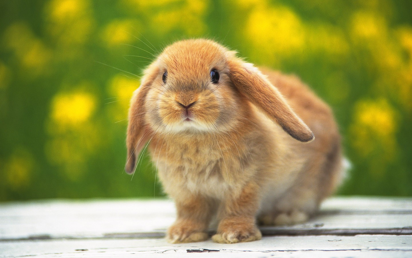 Adorable Rabbit Wallpaper