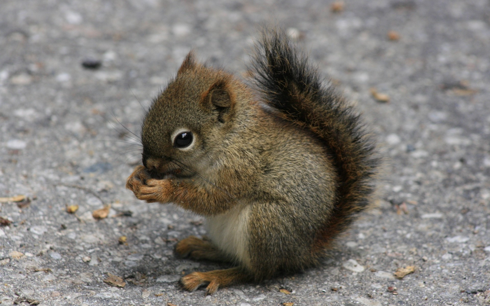 Adorable Little Squirrel wallpaper