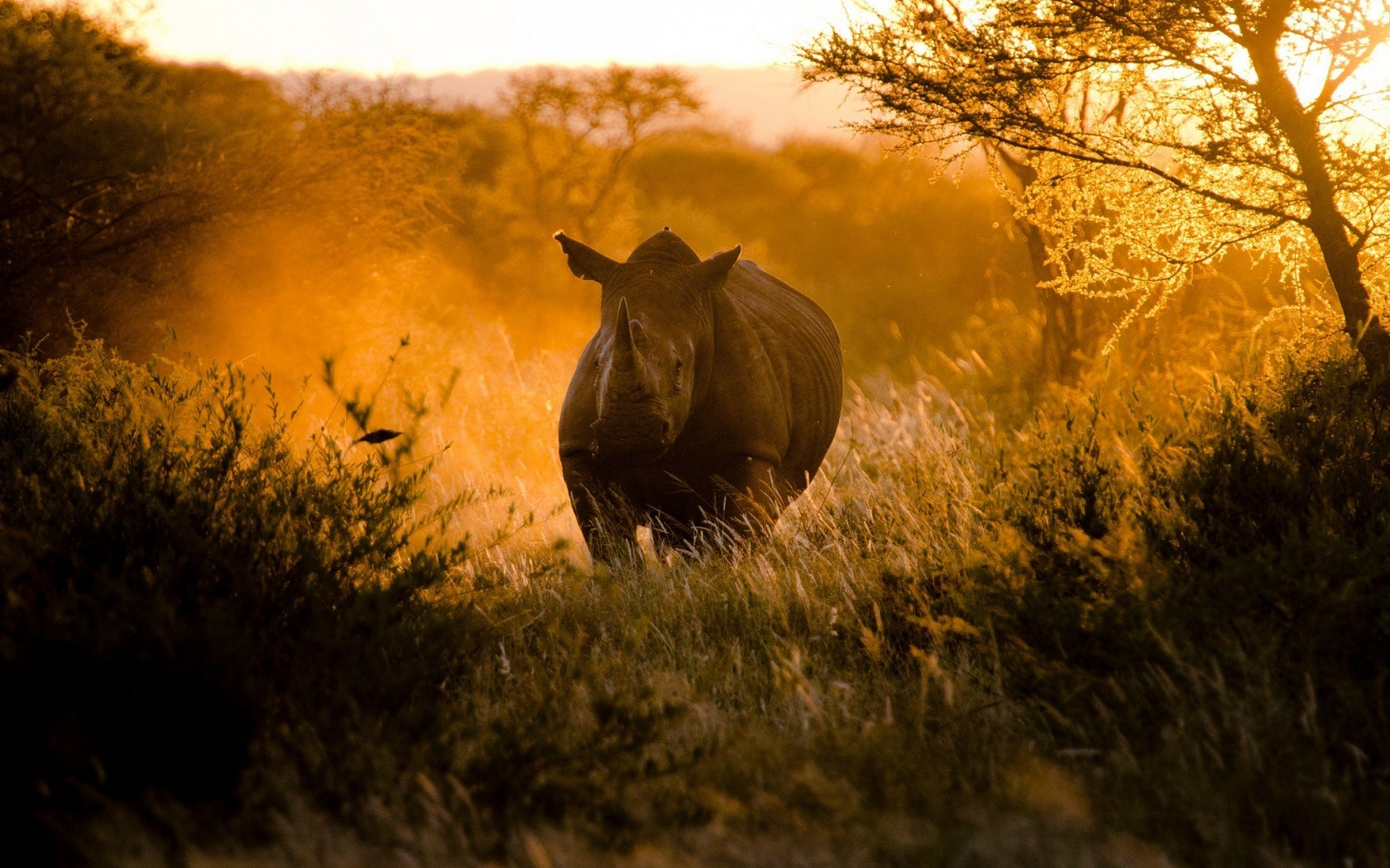 Africa Rhinoceros Nature