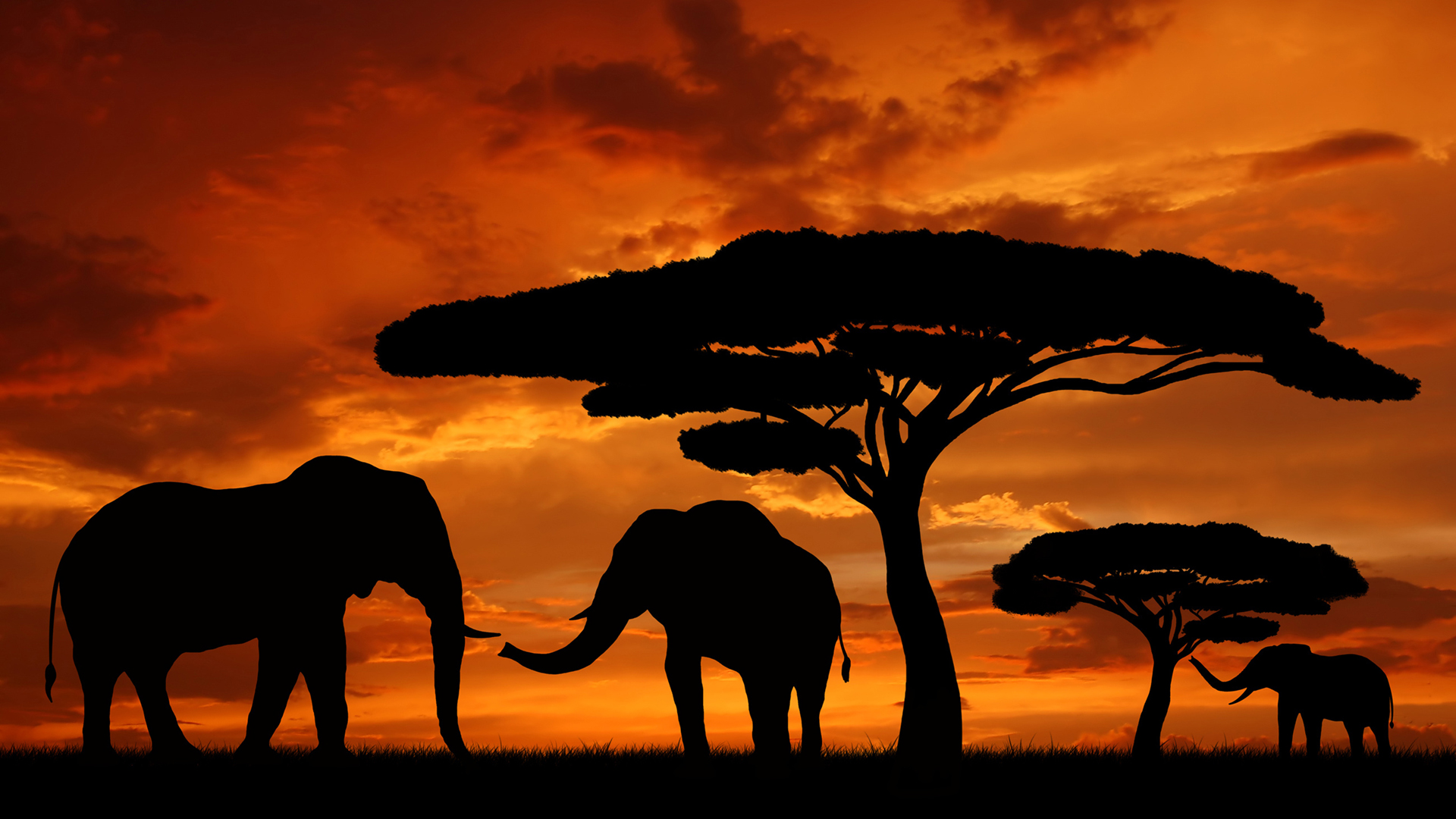 Africa Silhouettes Elephants Wallpaper