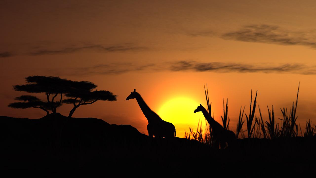 Africa – Safari
