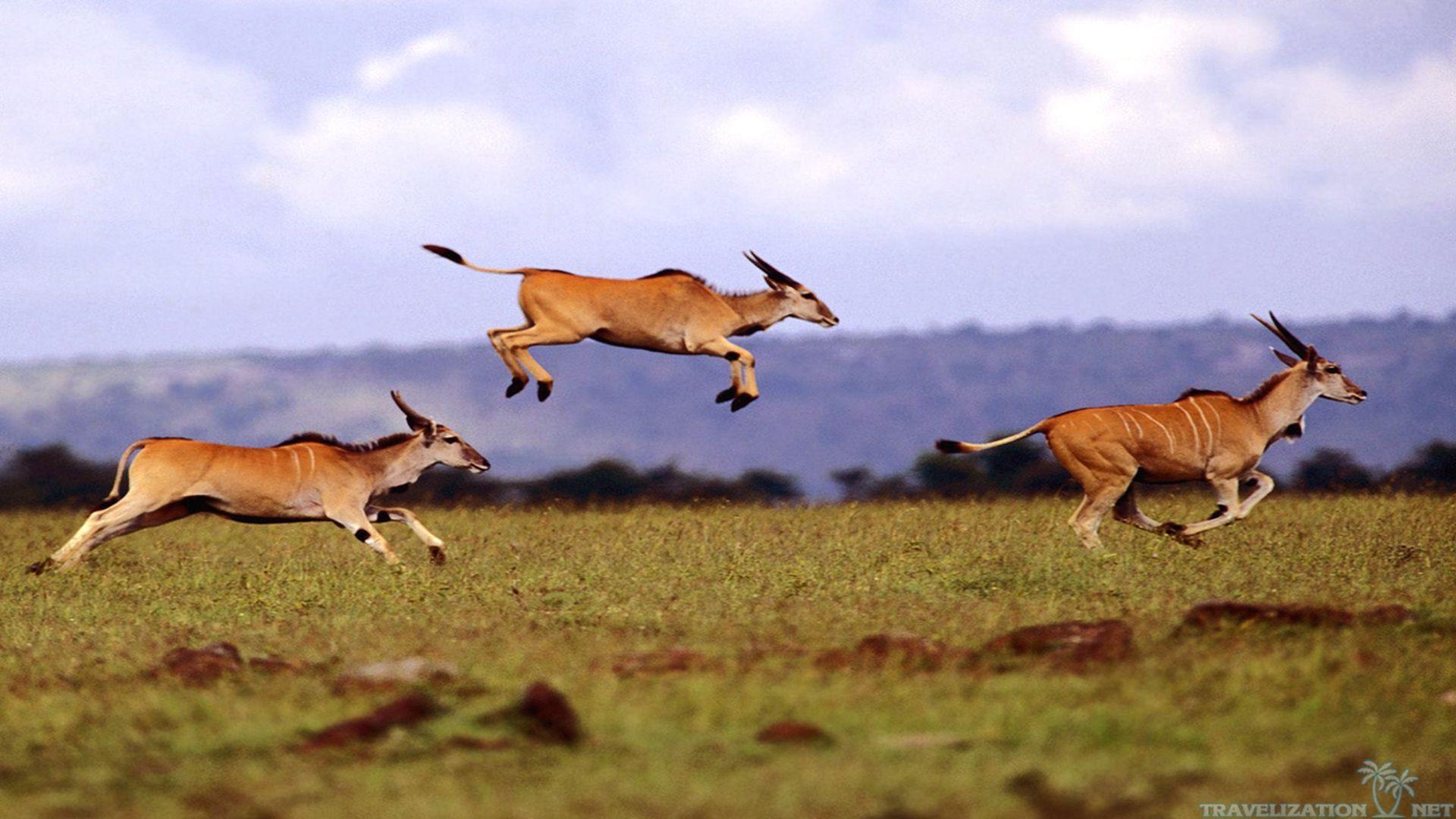 African Safari Wallpaper 1920x1080 57983