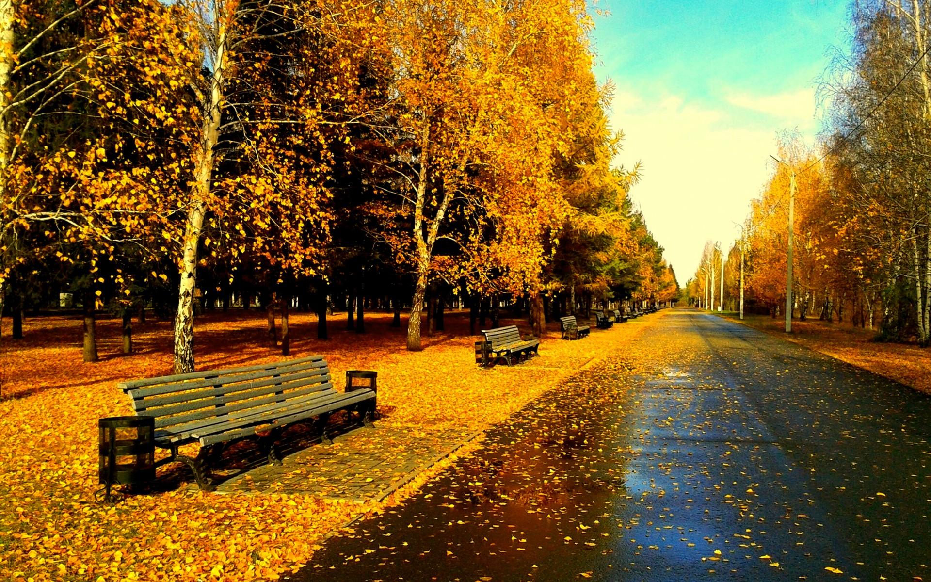Park After Rain wallpaper