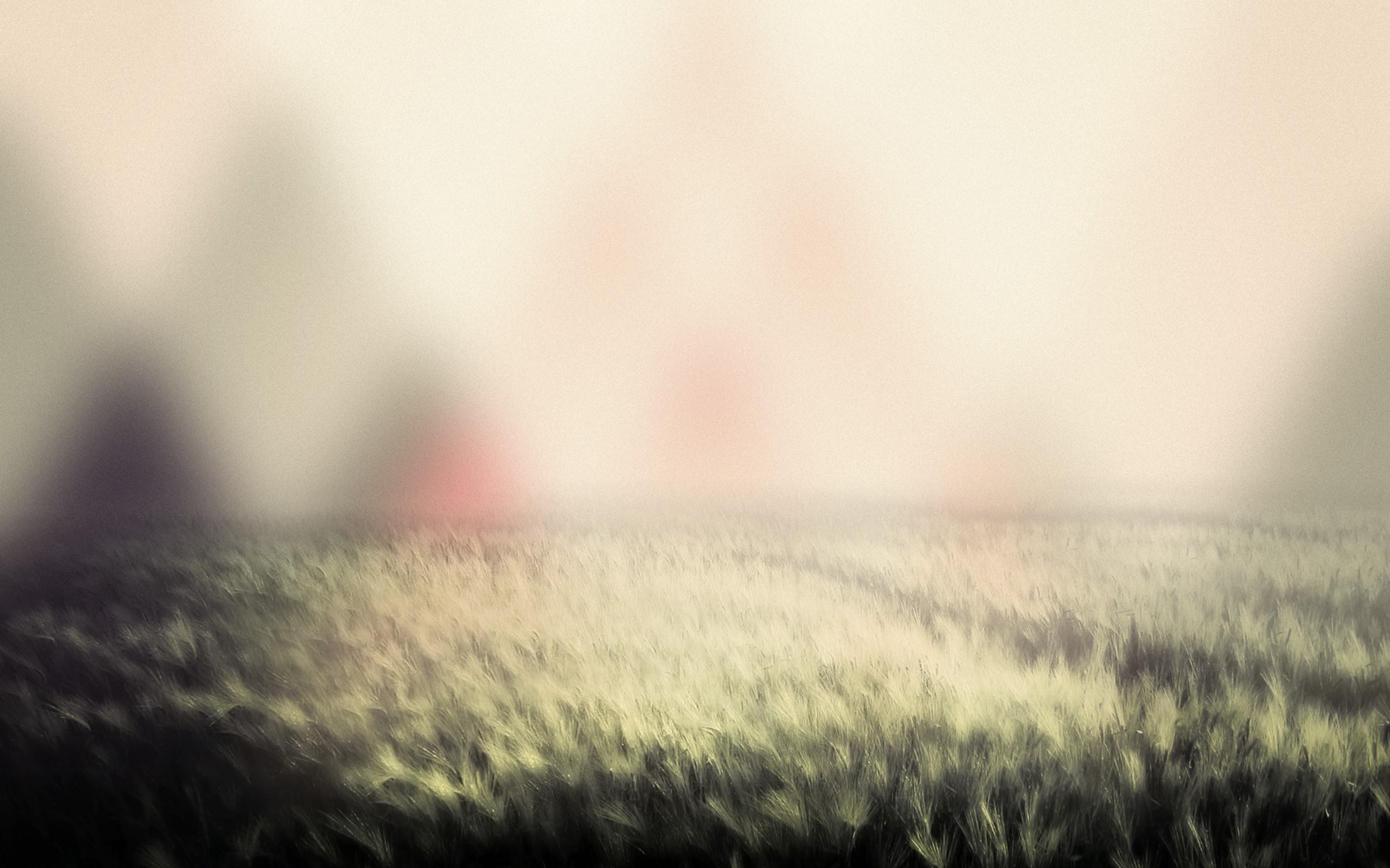 Amazing Blurred Wallpaper