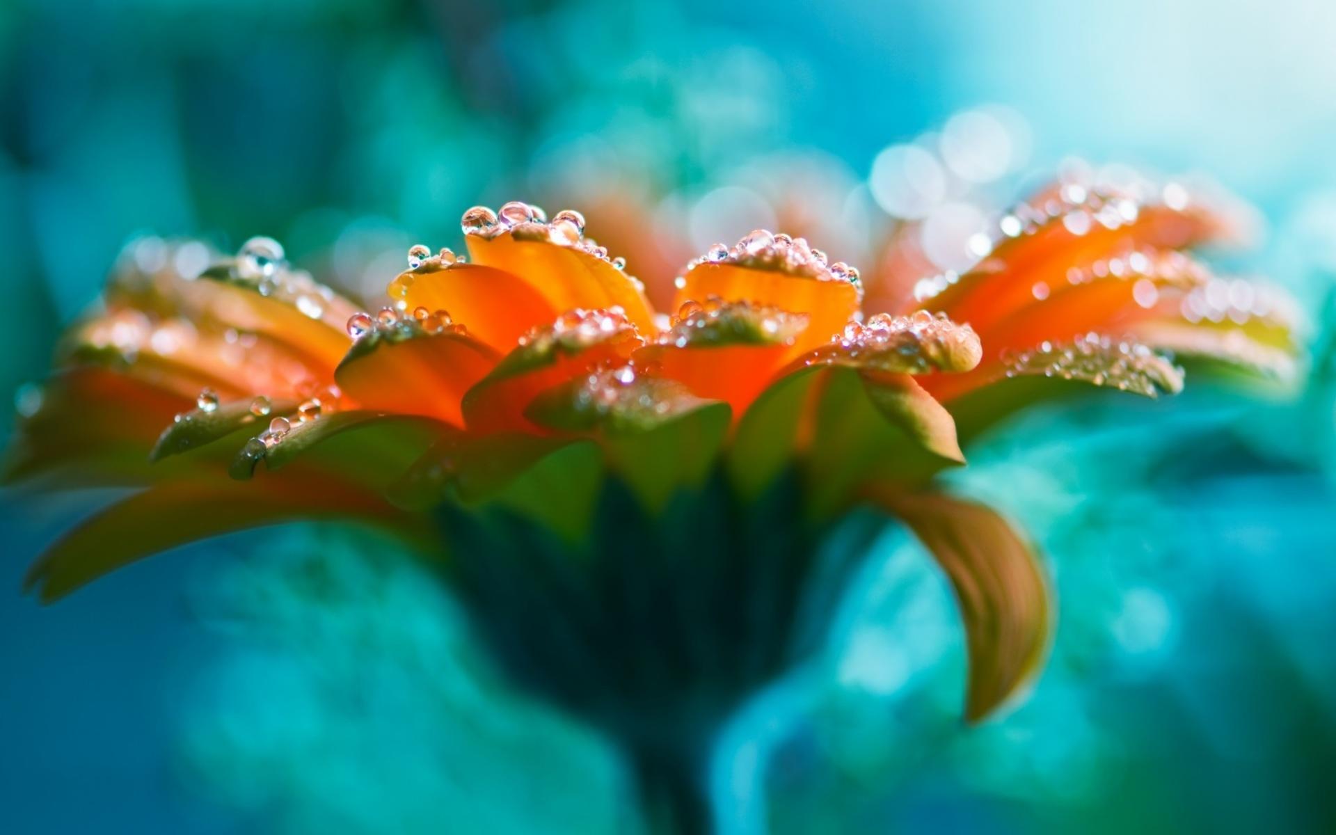 Amazing Bright Flowers Wallpaper