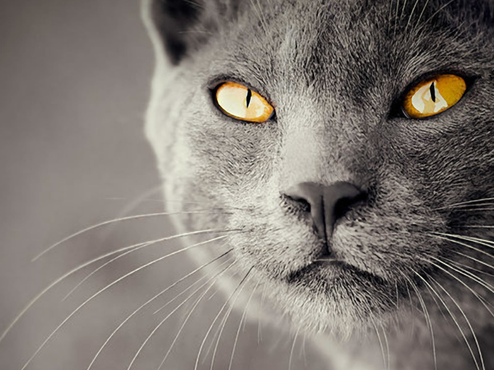 Amazing Cat Wallpaper