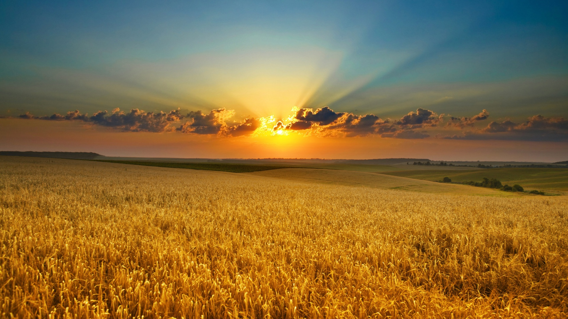 Amazing Cornfield Wallpaper