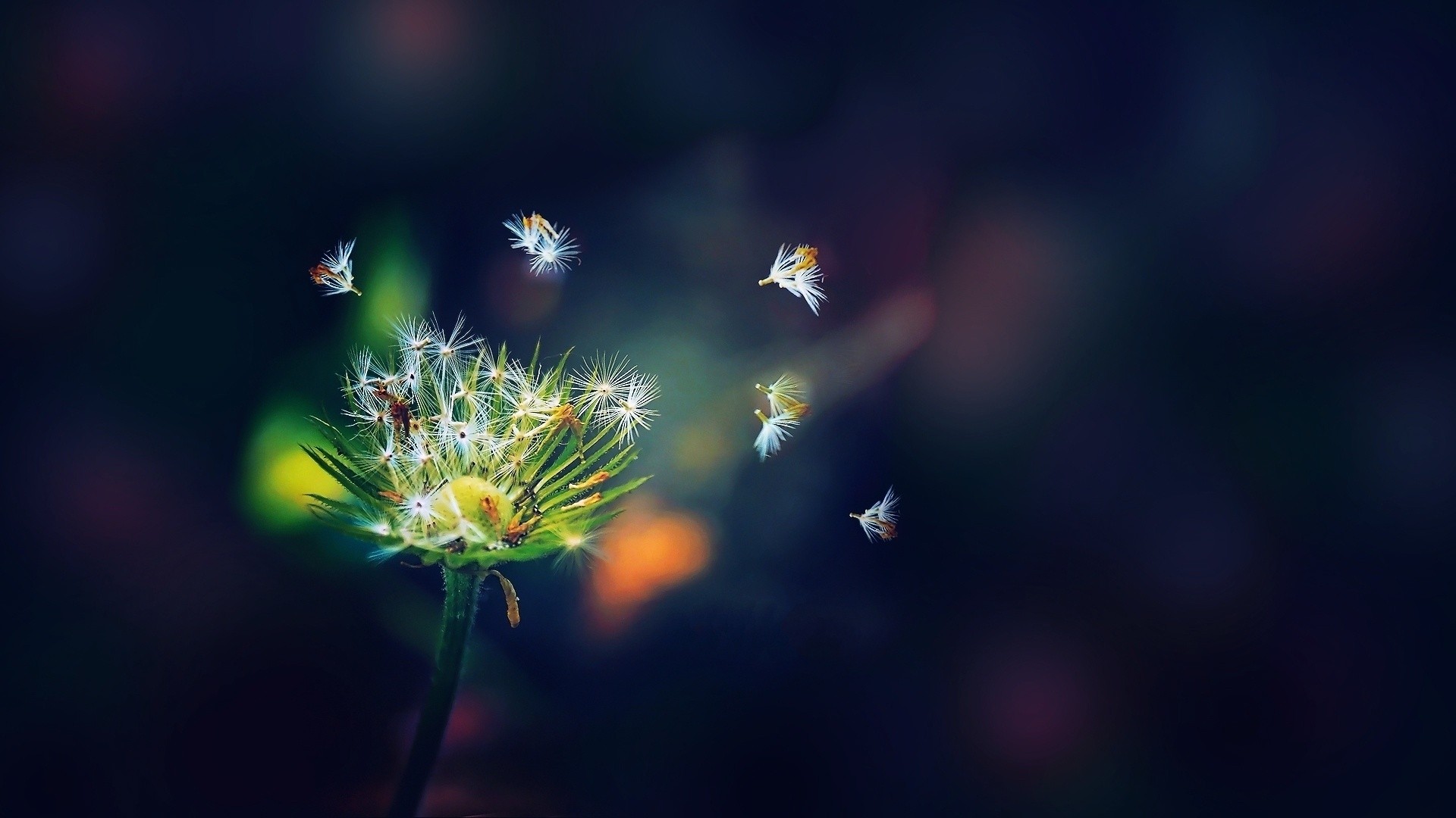 Amazing Dandelion Seeds Wallpaper