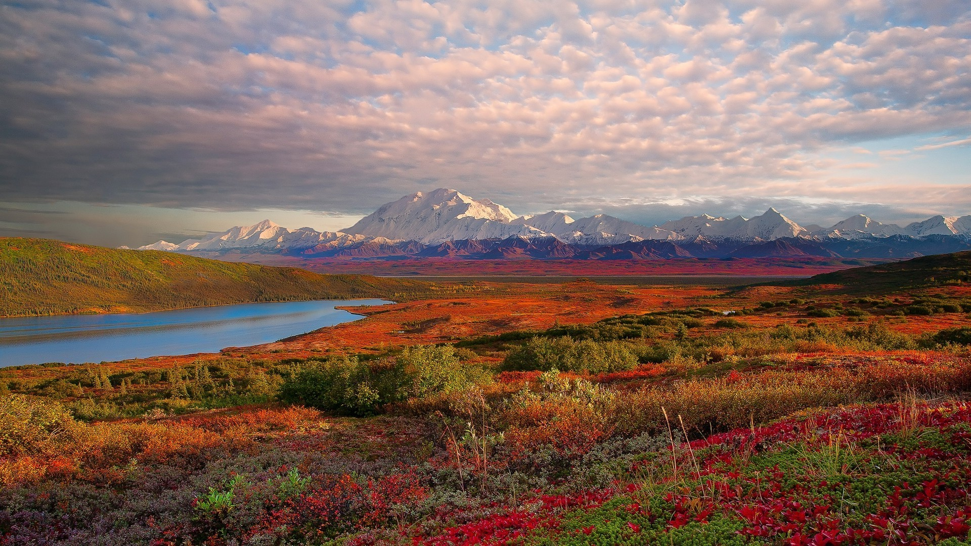 Amazing Denali National Park Wallpaper