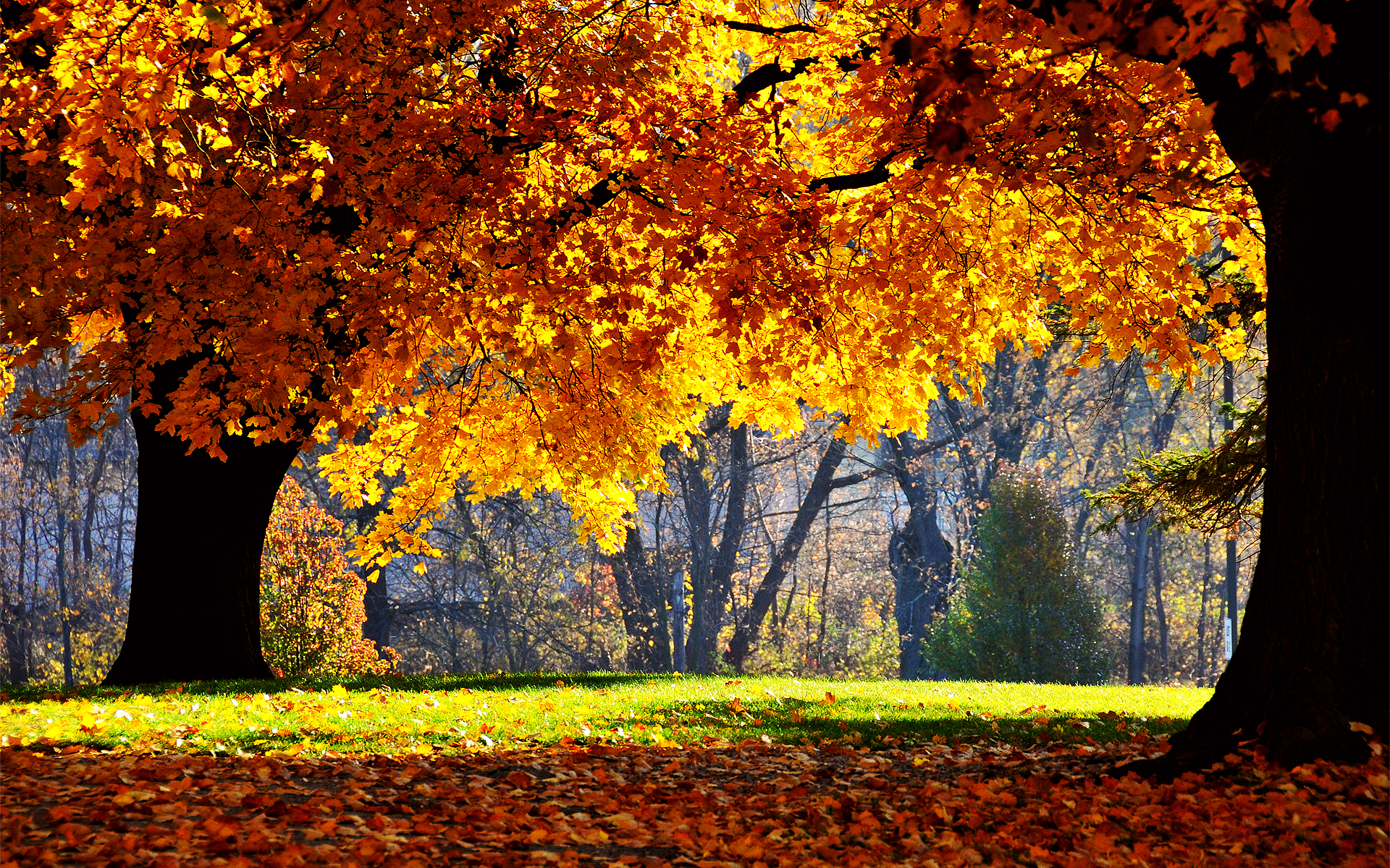 Amazing Fall Backgrounds