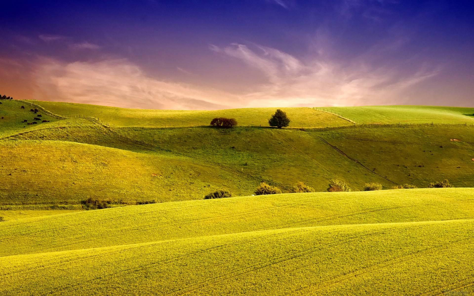 Amazing Field Wallpaper