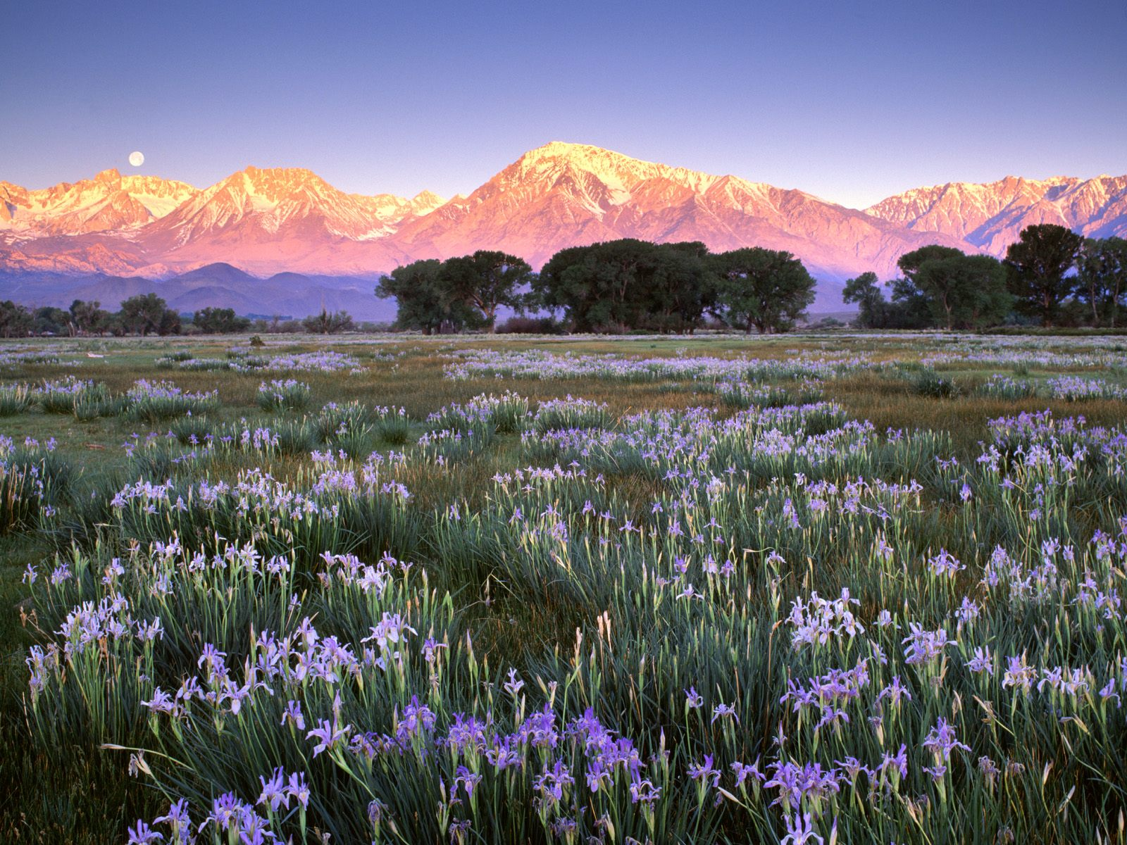 Amazing Flower Meadow