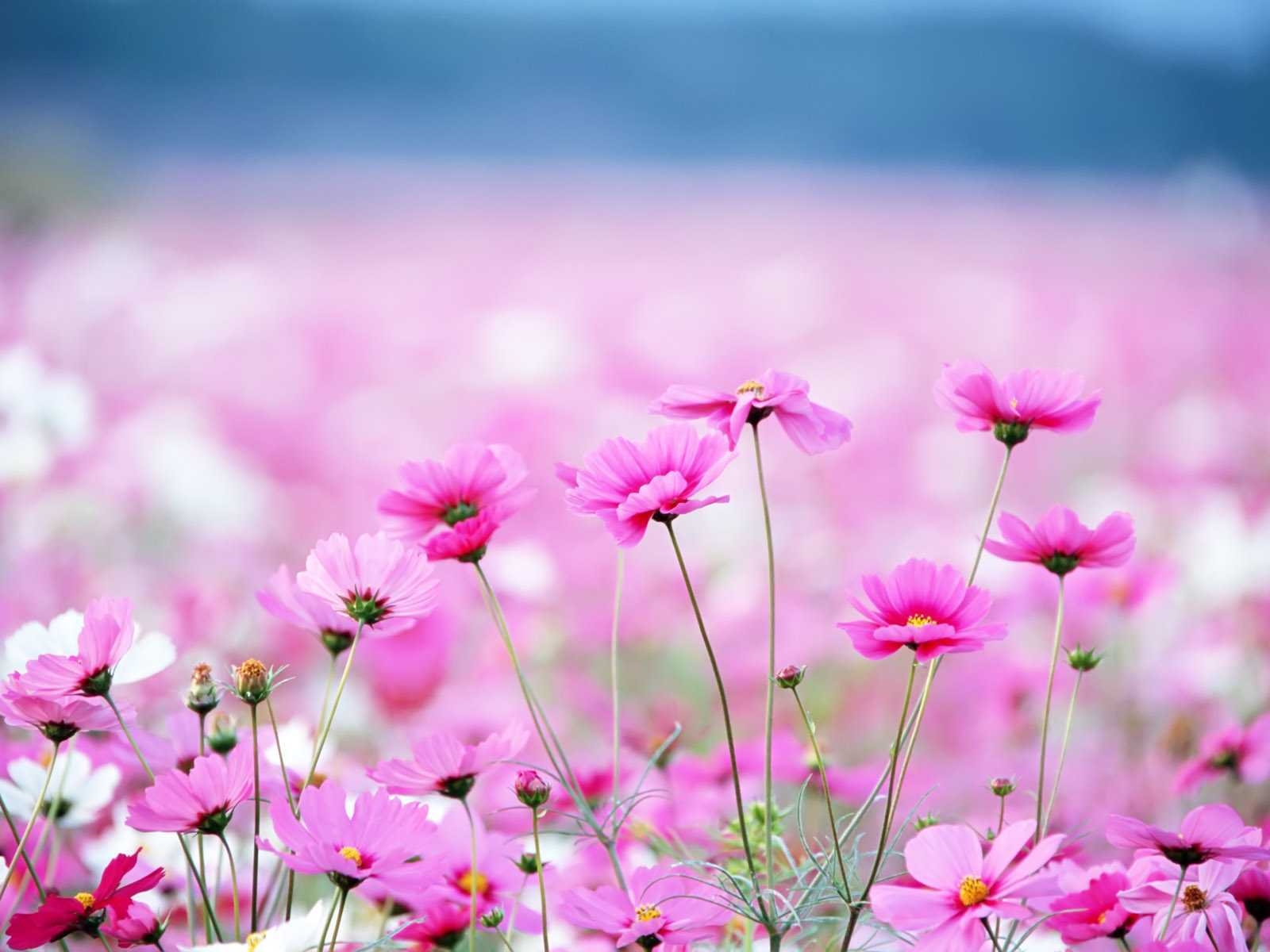 amazing flower pictures wallpaper  x, Beautiful flower
