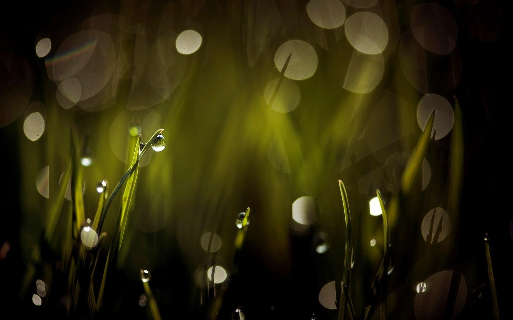 Amazing Grass Bokeh Wallpaper