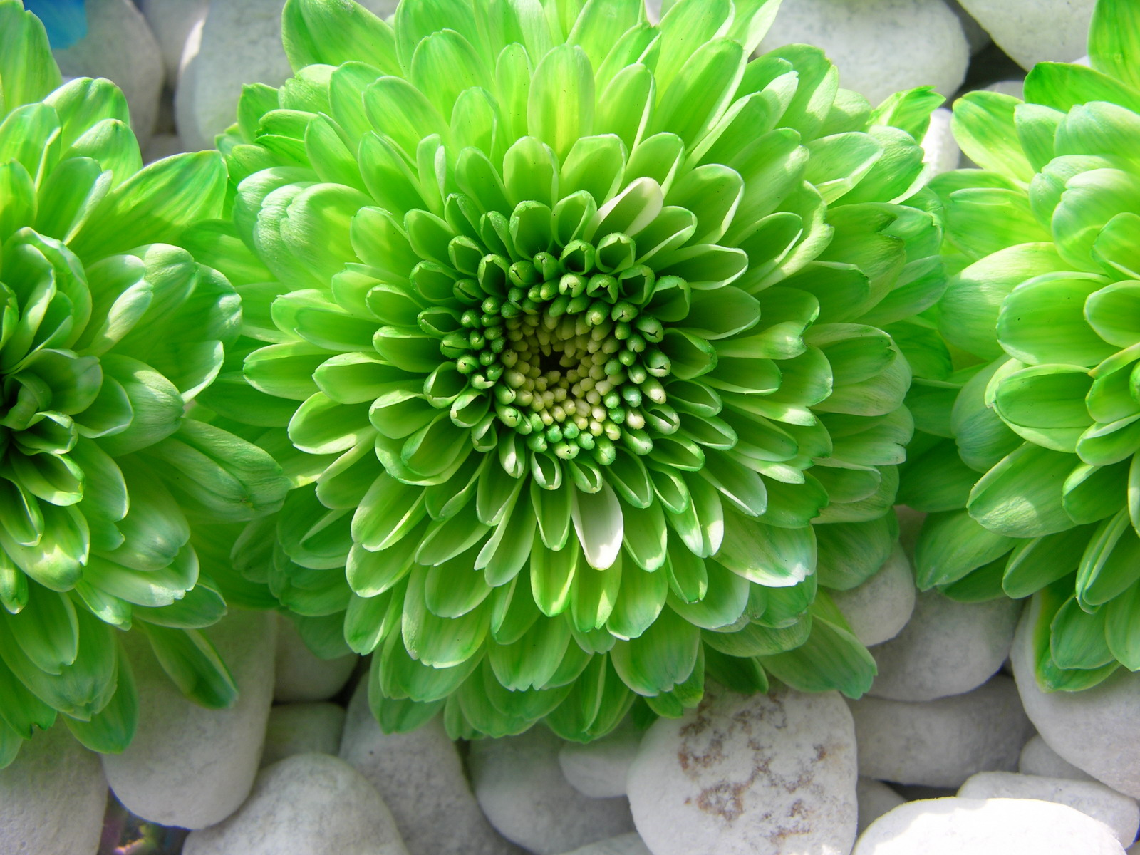 Nice green flower amazing wallpaper