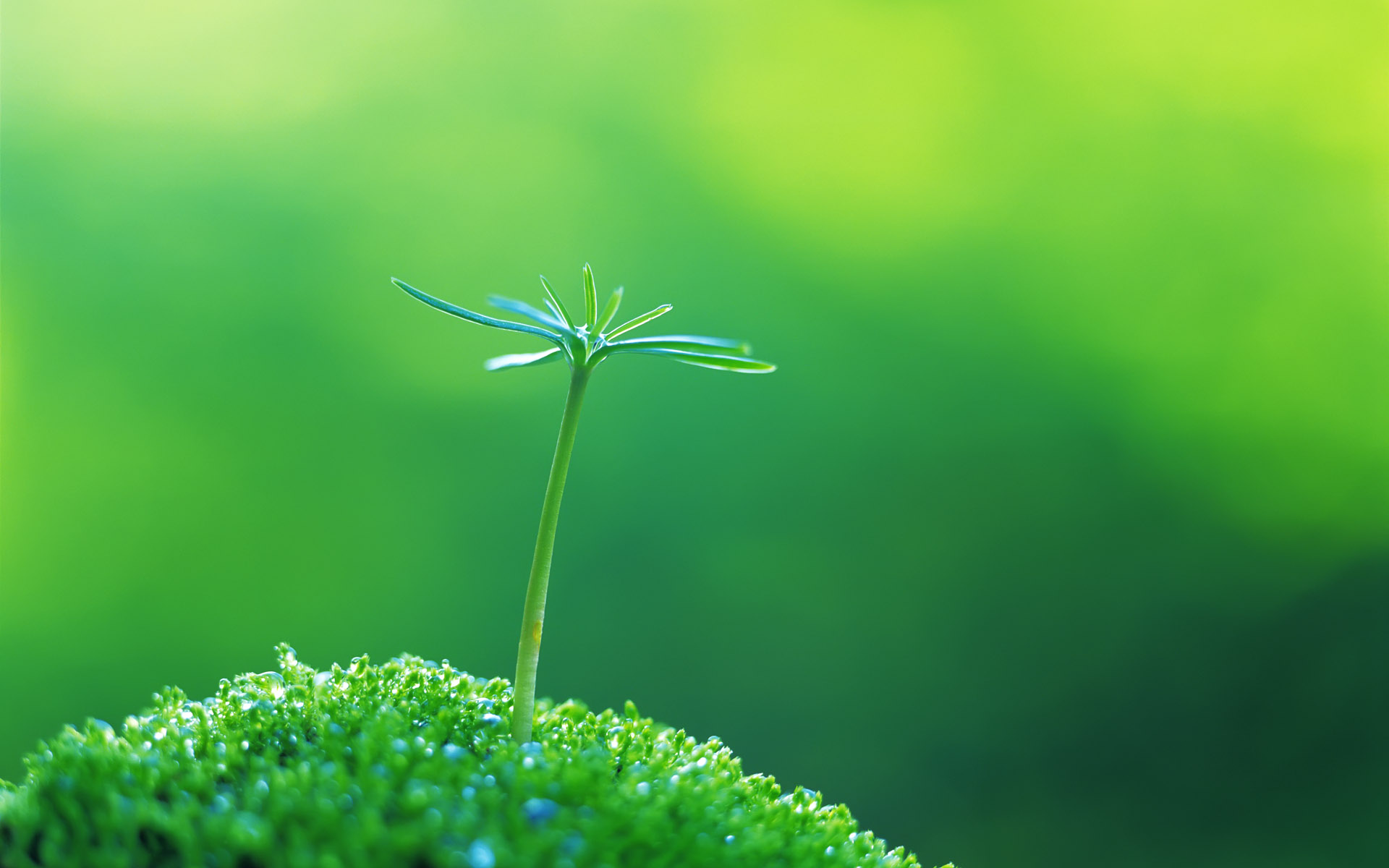 Amazing Green Macro Wallpaper