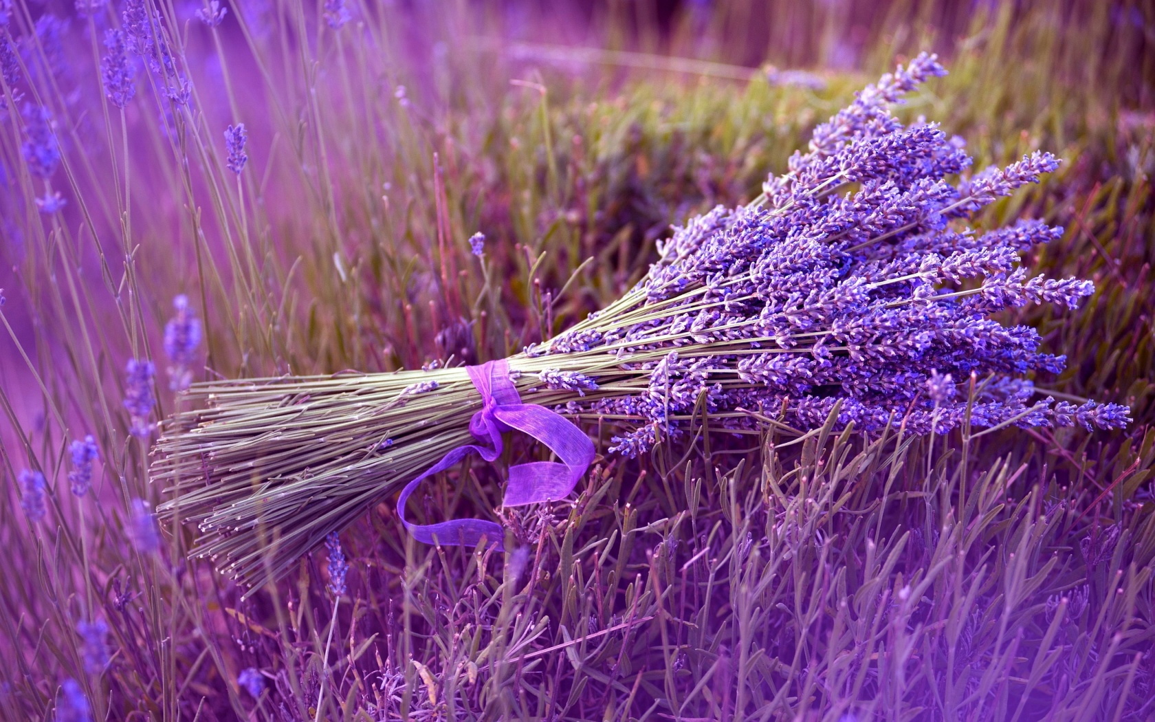 Amazing Lavender Wallpaper