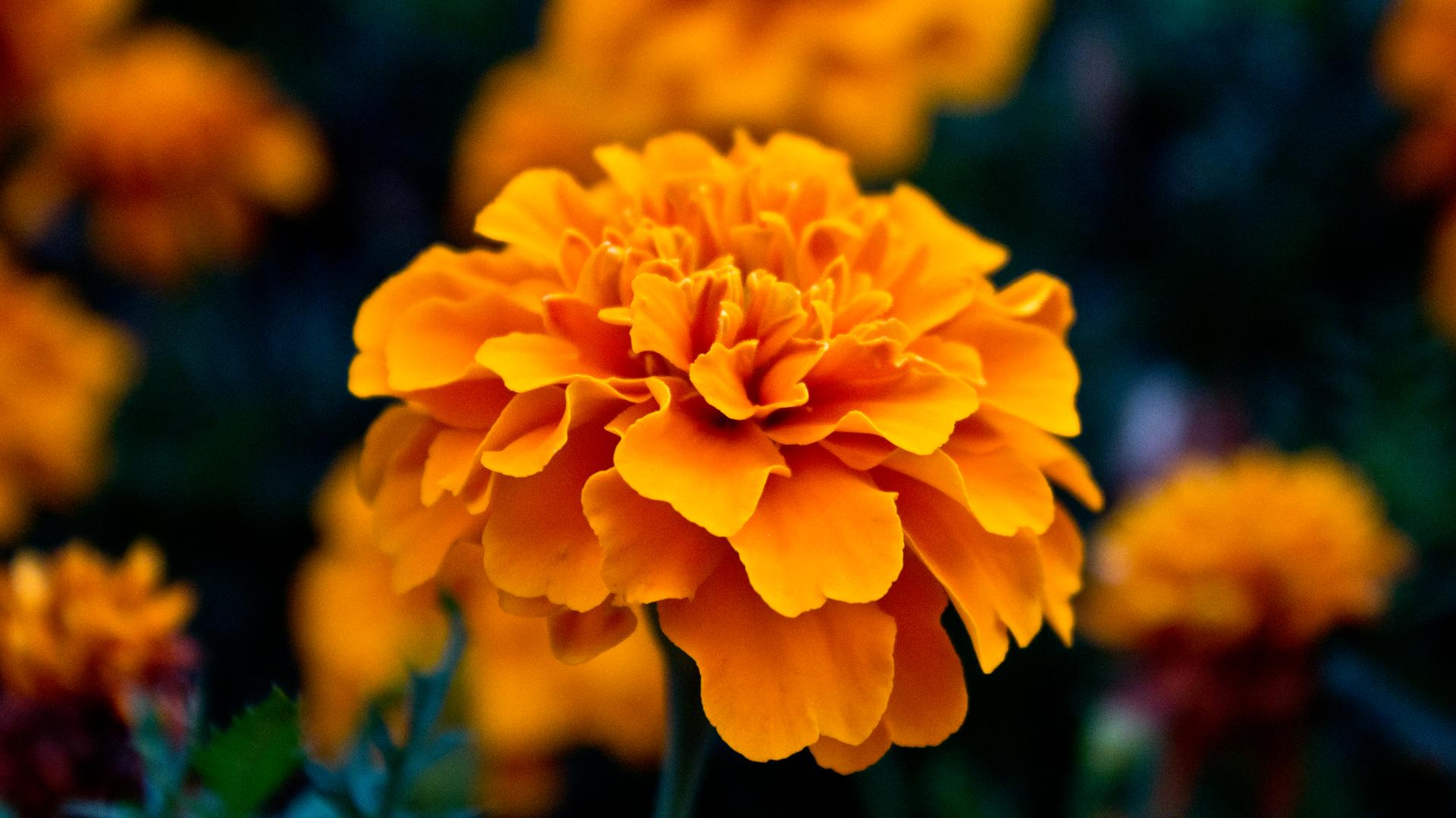 Amazing Orange Flowers