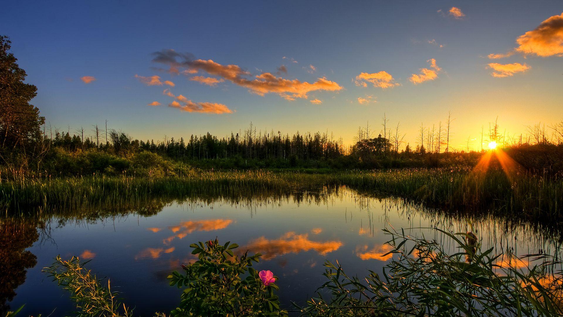Amazing Pond Wallpaper