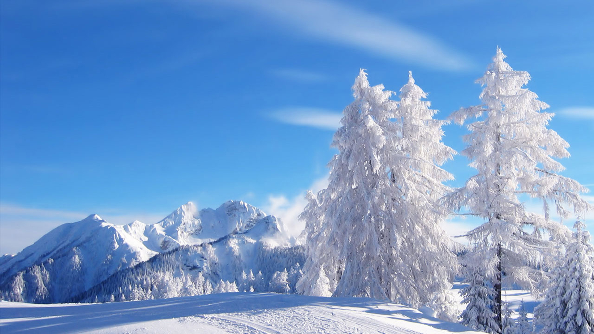 amazing snow trees wallpaper | 1920x1080 | #26706