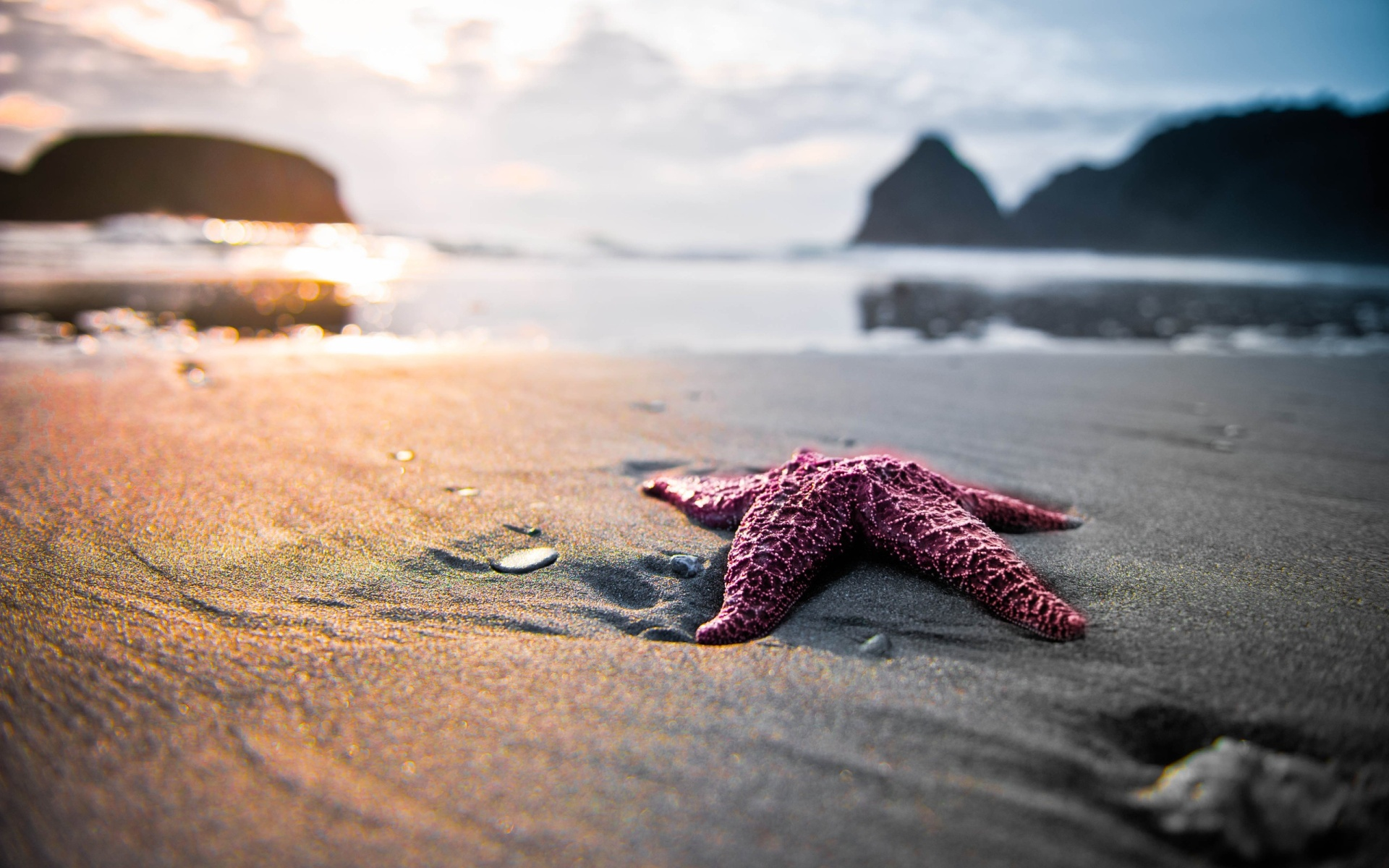 Amazing Starfish Wallpaper