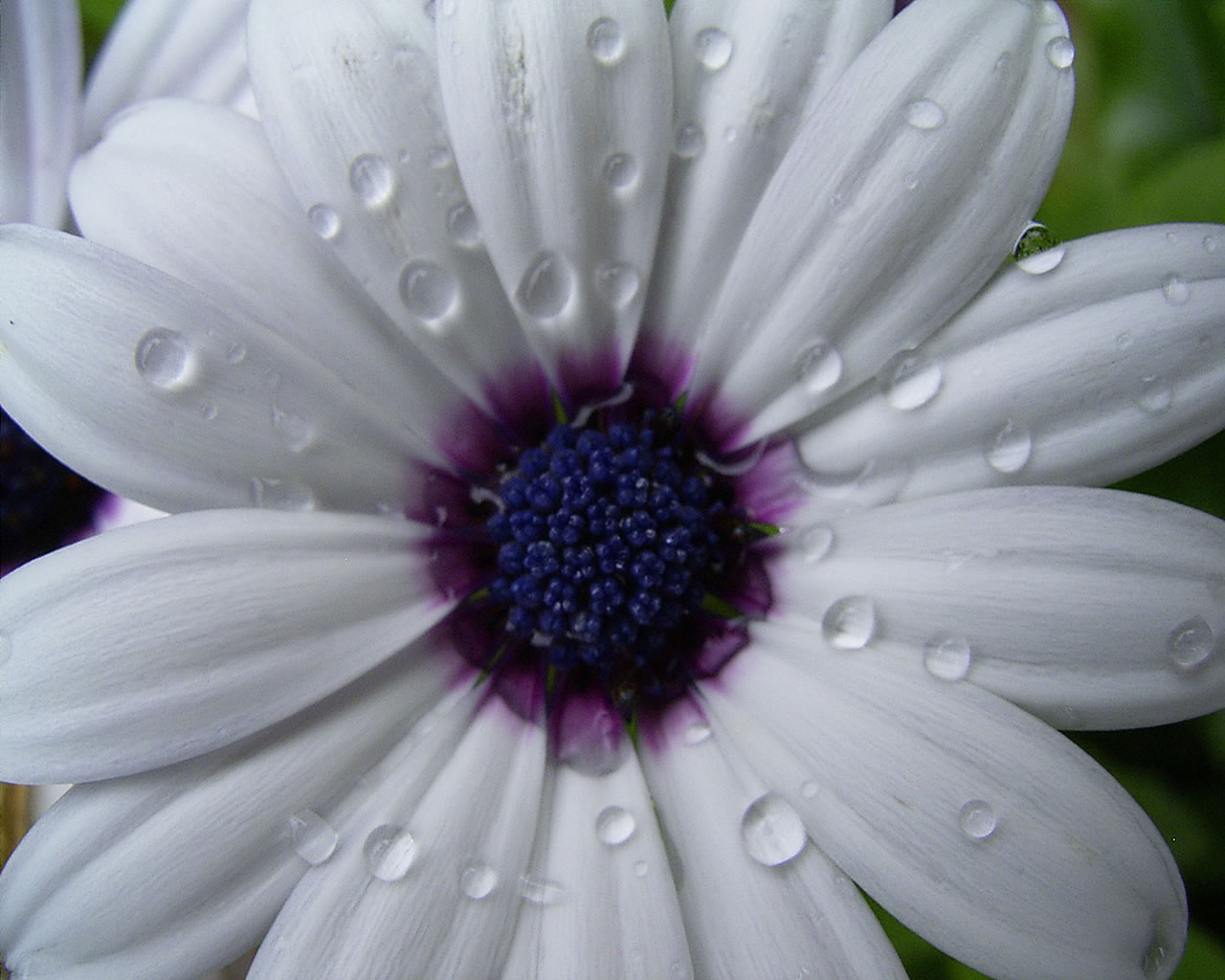 Amazing White Flowers 9164