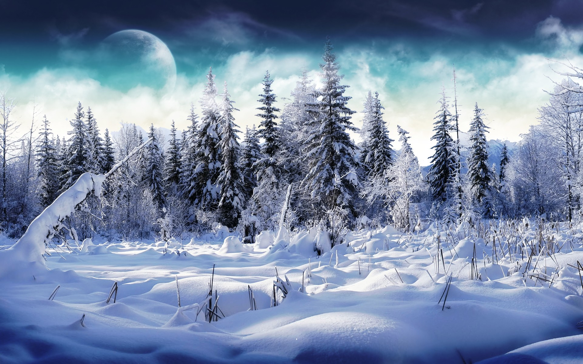 Amazing Winter On The Forest Wallpaper Desktop Wallpaper