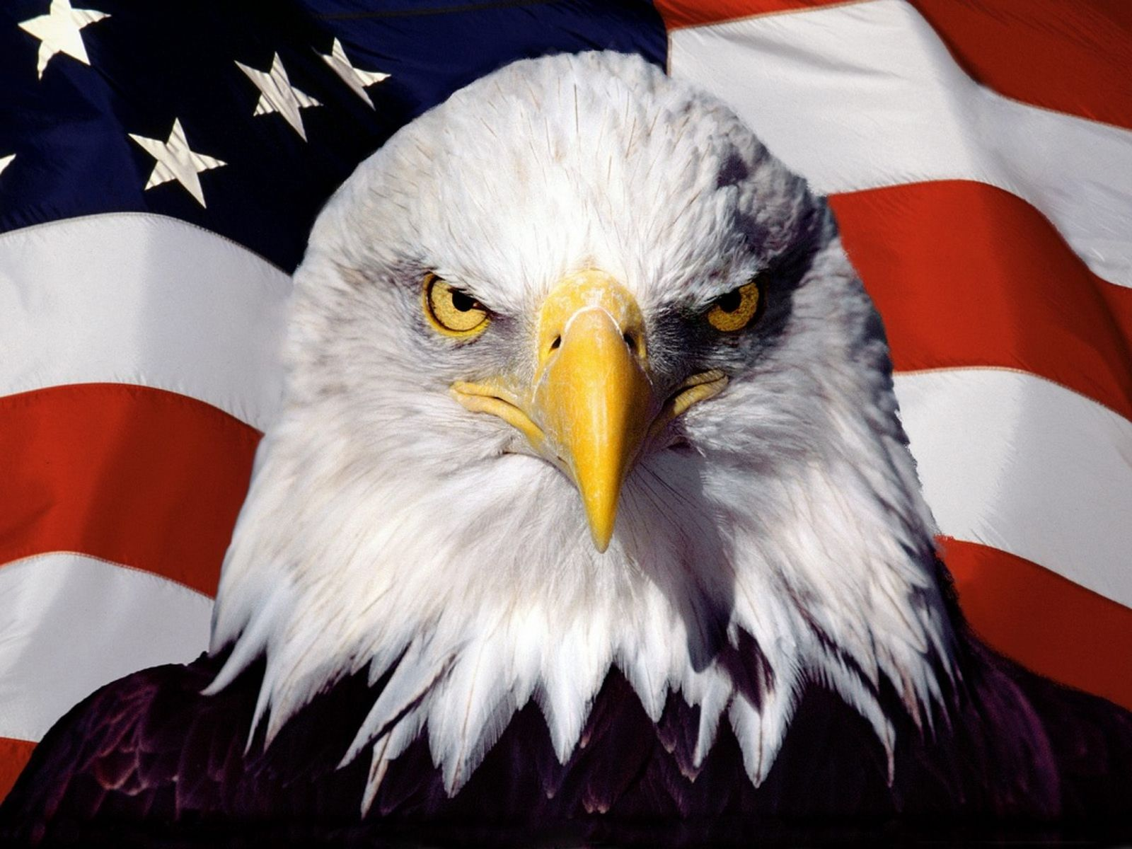 Eagle American Flag Wallpaper #185184 - Resolution 1600x1200 px