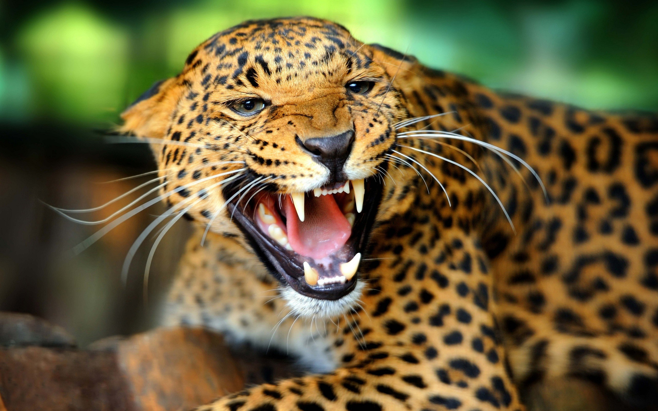 Animal Close Up Wallpaper