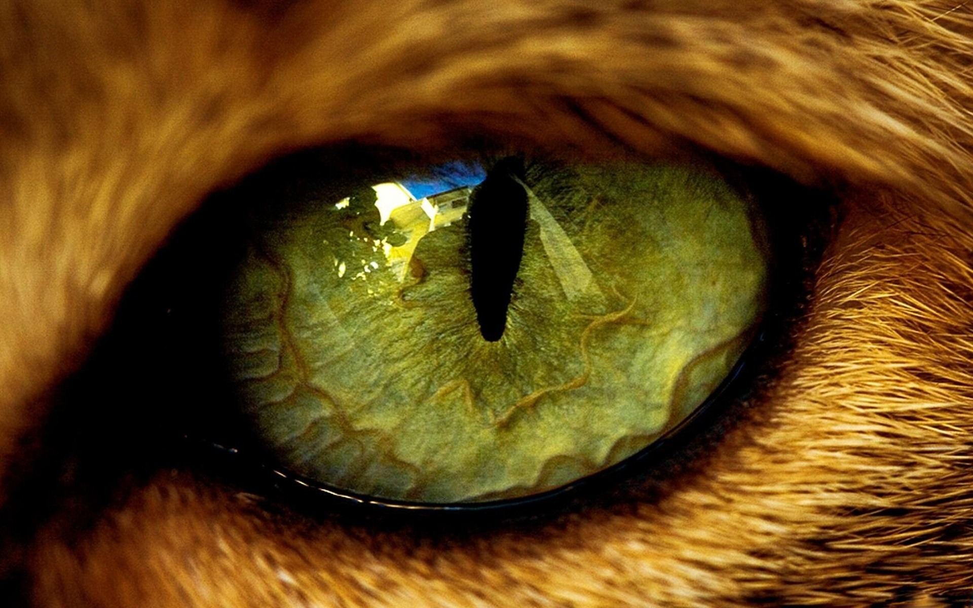 Download high quality 1920 x 1200 Green animal eye Wallpaper.