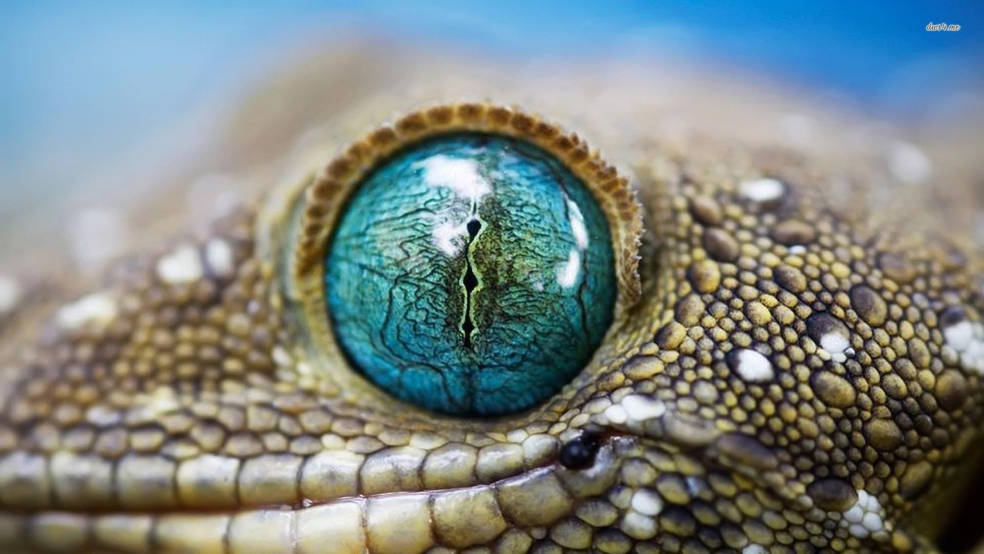 ... Lizard eye wallpaper 1920x1080 ...