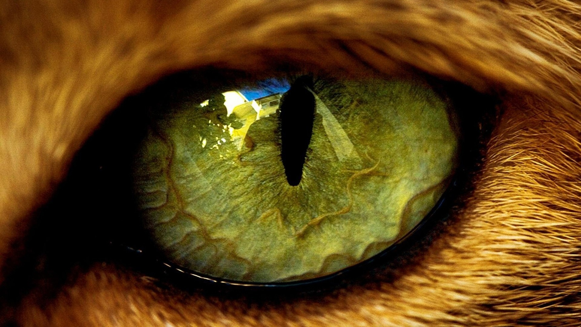 Download high quality 1920 x 1080 Green animal eye Wallpaper.