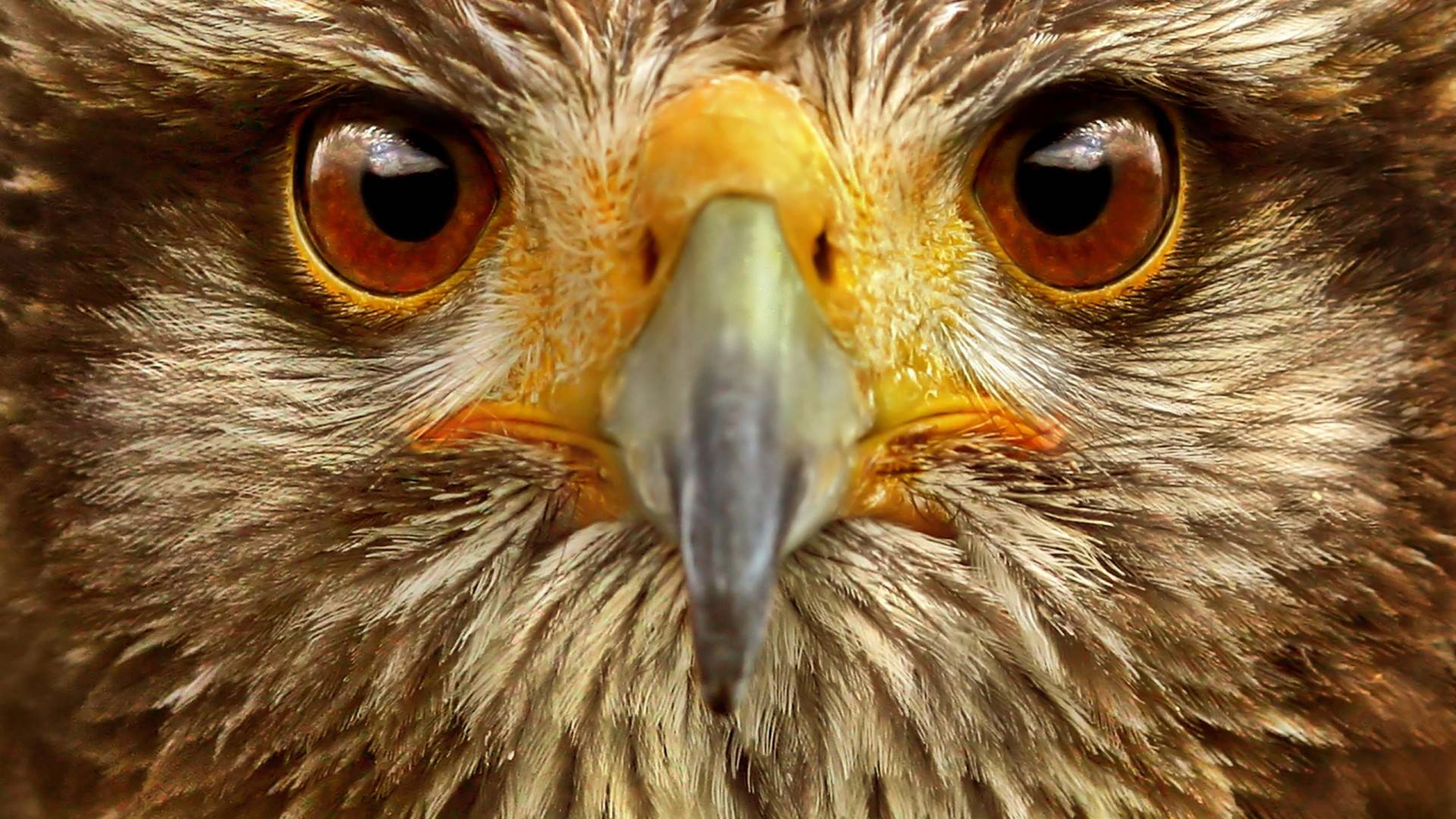Animal eyes wallpaper 1920x1080 11393 - Animal 1920x1080 ...