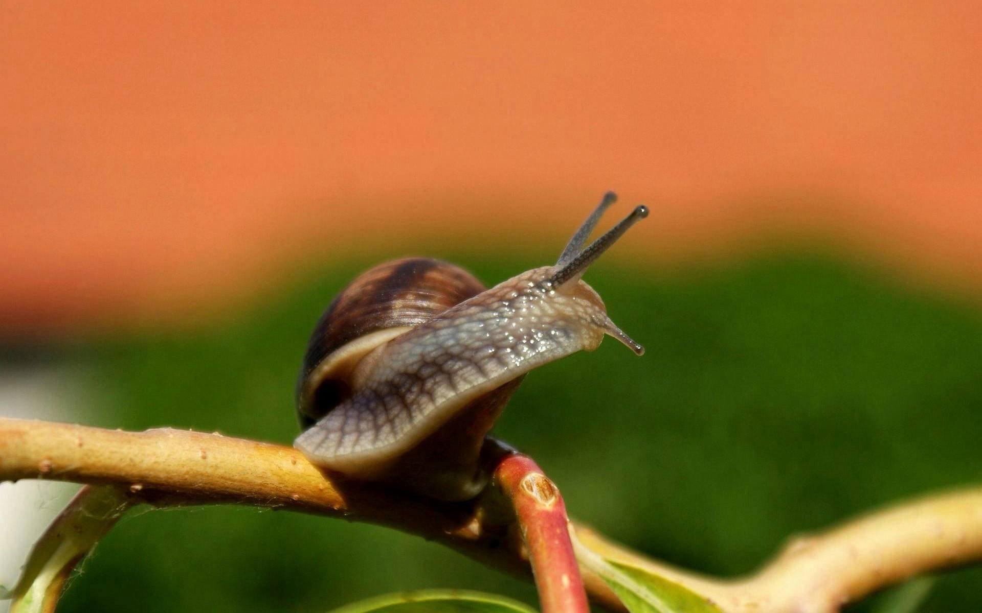Animal Snail Macro Wallpaper Hd