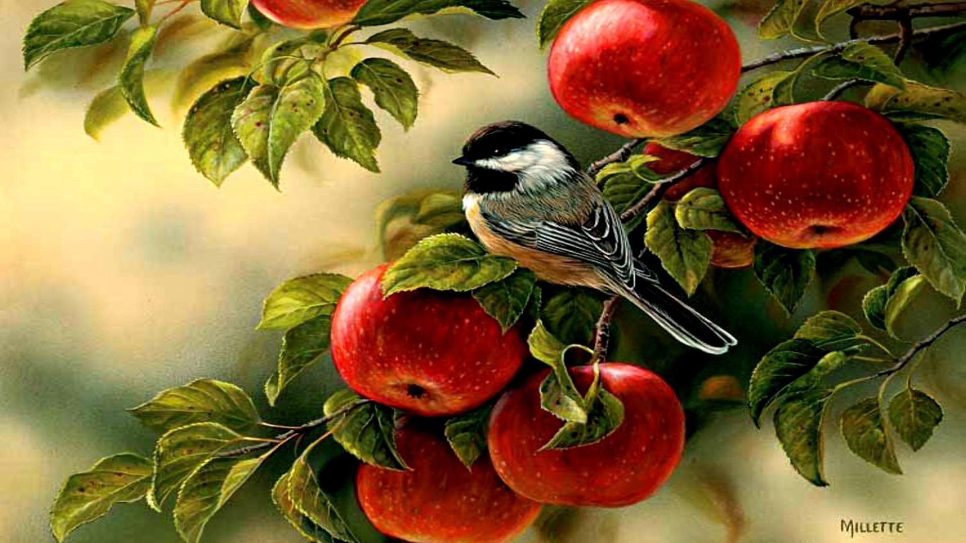 apple tree wallpaper 8