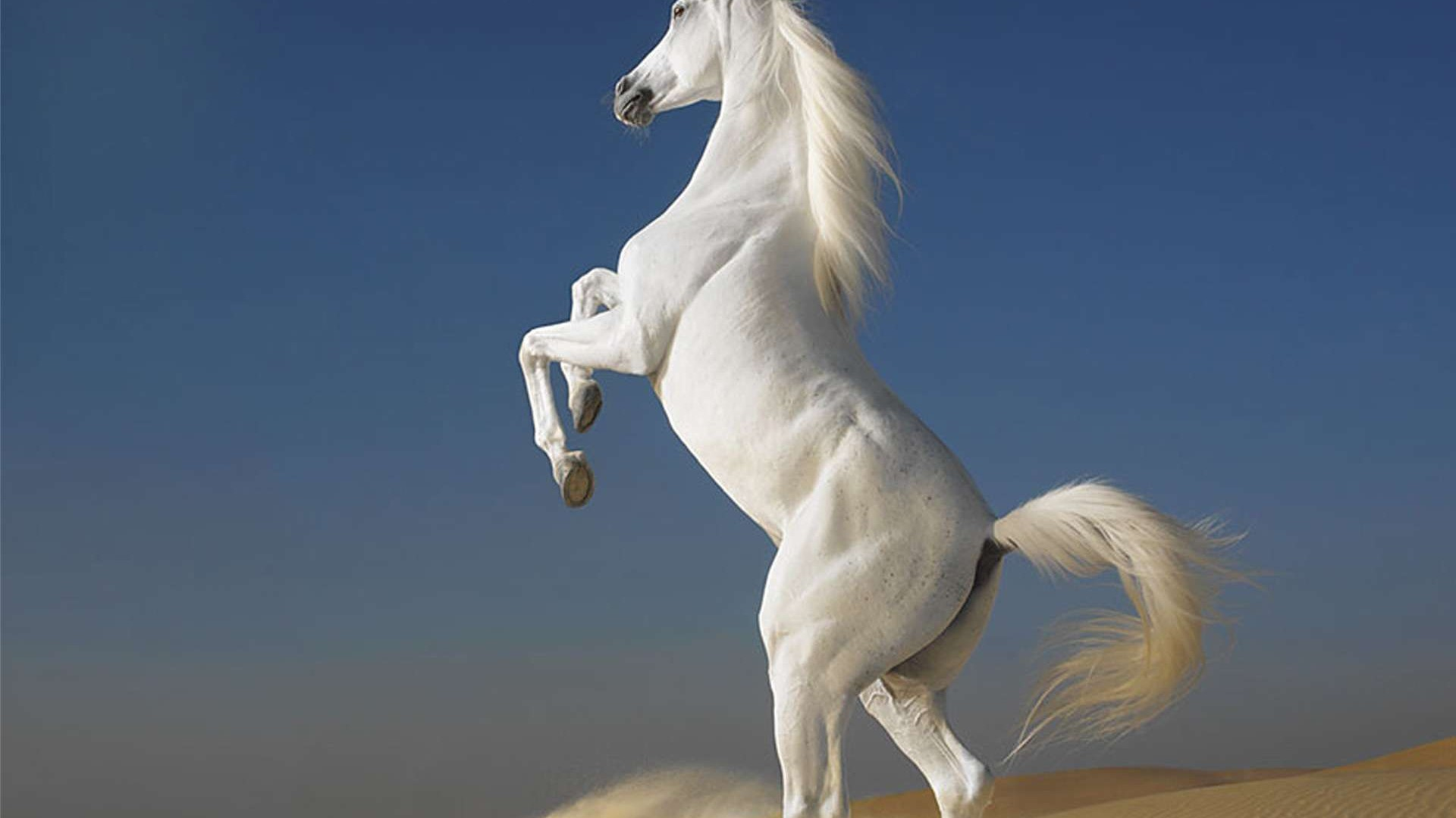 Download · Beautiful Horse Wallpaper