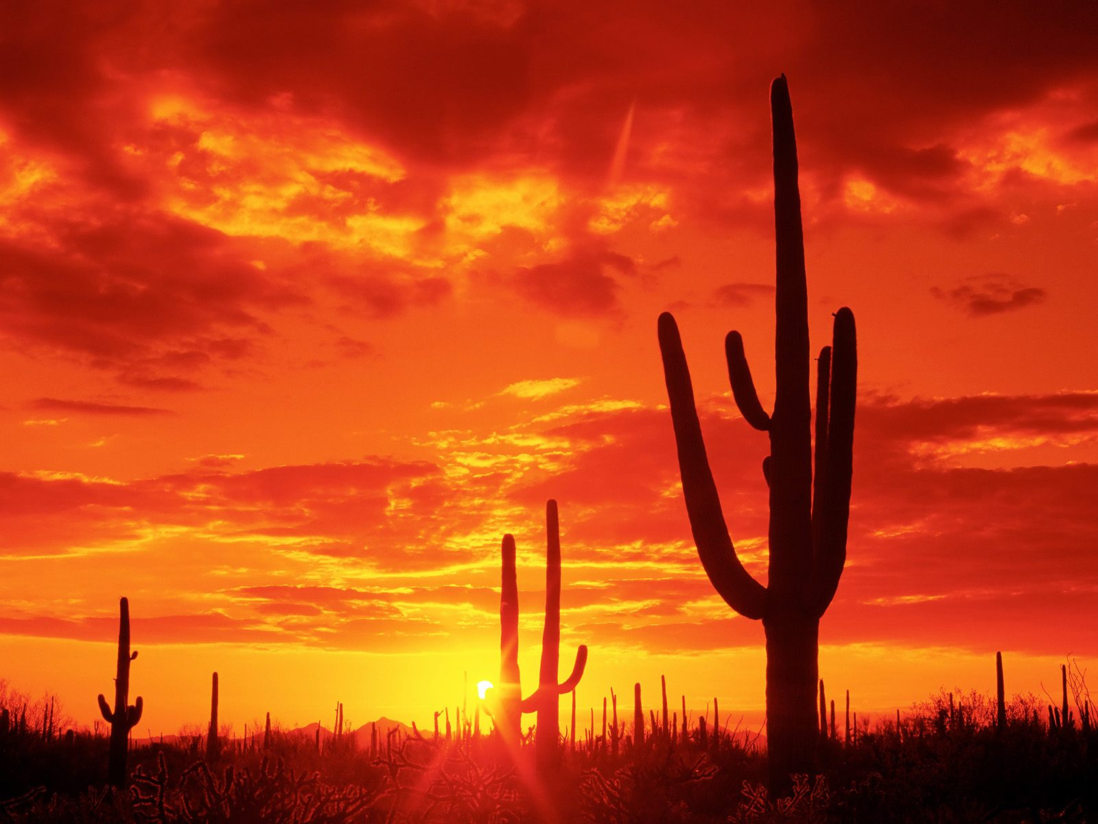 Burning-Sunset-Saguaro-National-Park-Arizona · TREE_FORGROUND_BACKGROUND_COLORFUL_SUNSET_Wallpaper_5zh6v