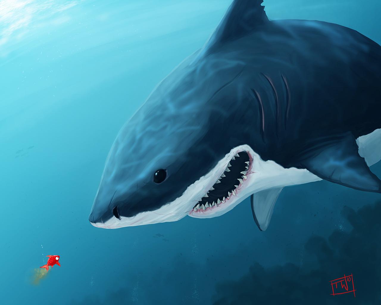 Art shark fish wallpaper 1280x1024 8986 for How to shark fish