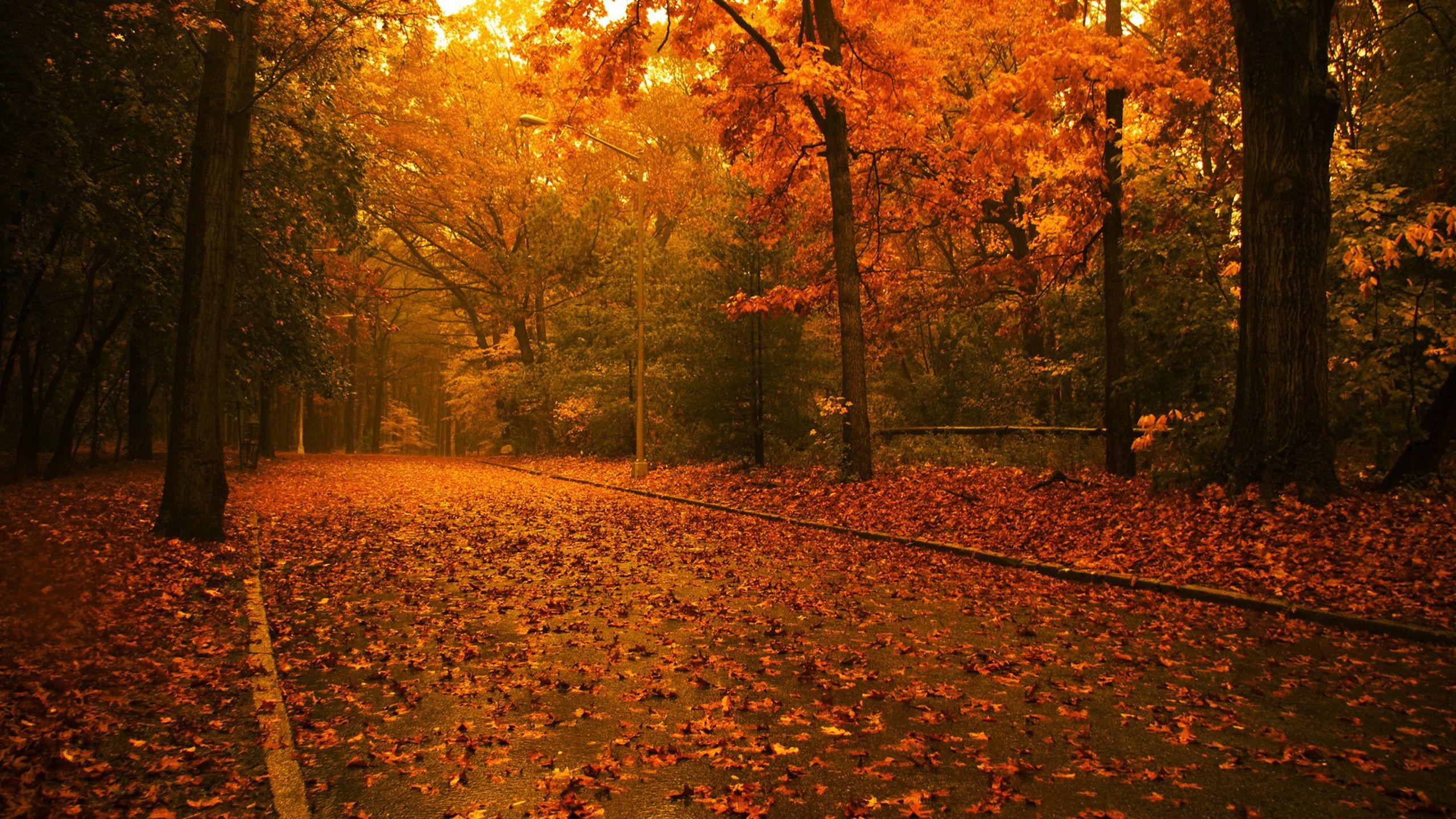 Landscapes Nature Trees Autumn Season Forest Fallen Leaves Fresh New Hd Wallpaper