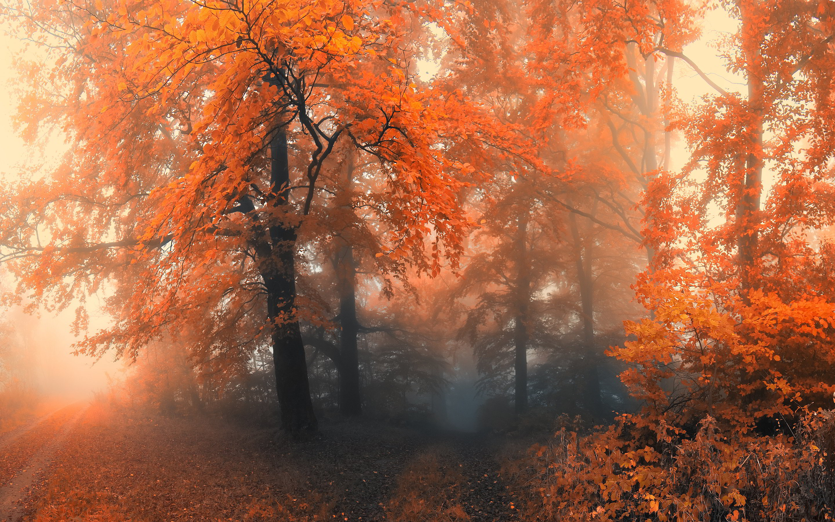 Autumn forest mist